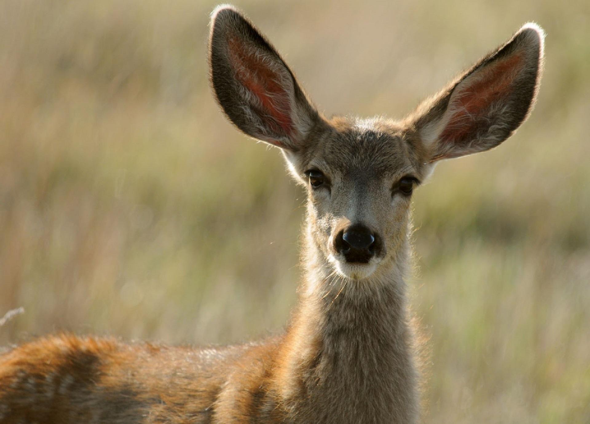Wild deer photo