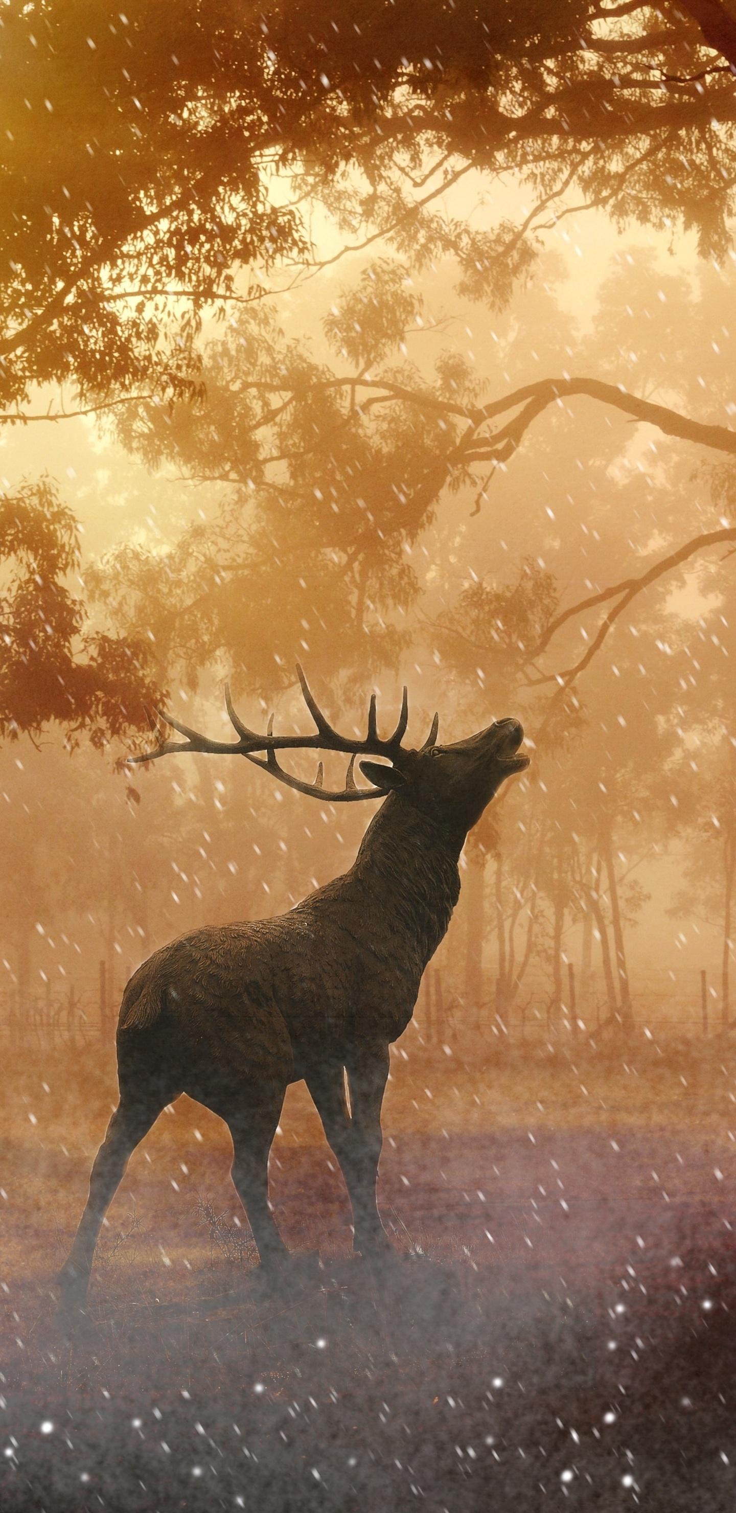 1440x2960 Deer Wild Nature Forest 4k Samsung Galaxy S8,S8+ ,Note 8 ...