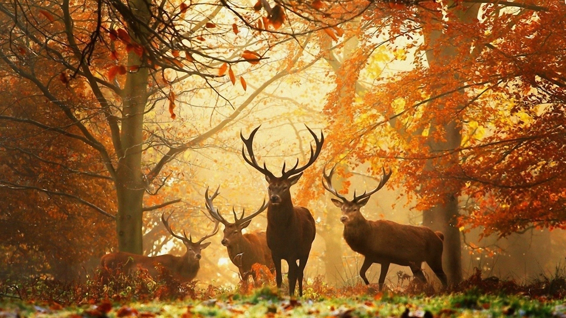 Wild Deer Pictures Wallpaper (54+ images)