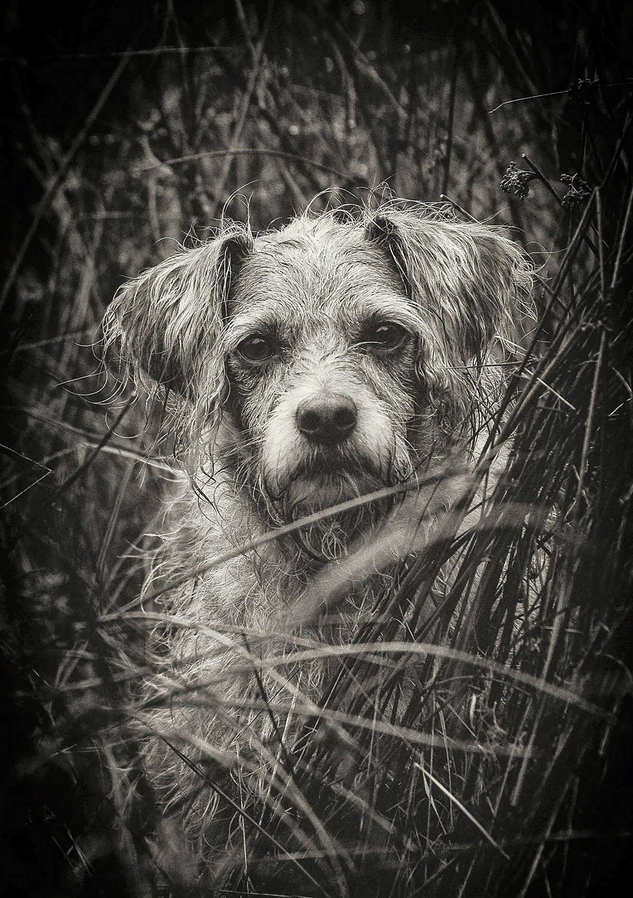Wild Dog, Dog, Friend, Loyal, Nature, HQ Photo