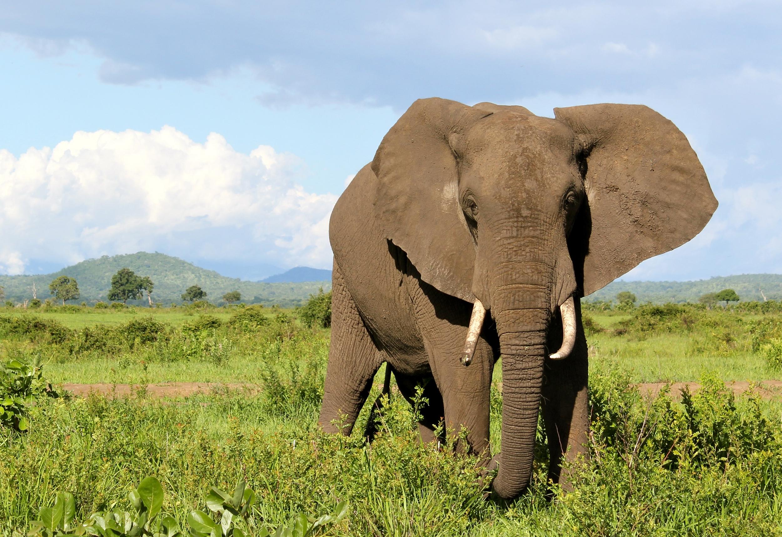 Wild elephants photo
