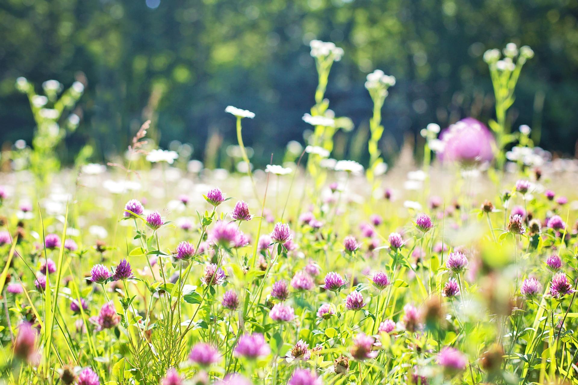 Free Photo Wild Flower Field Blooming Field Flower Free Download Jooinn