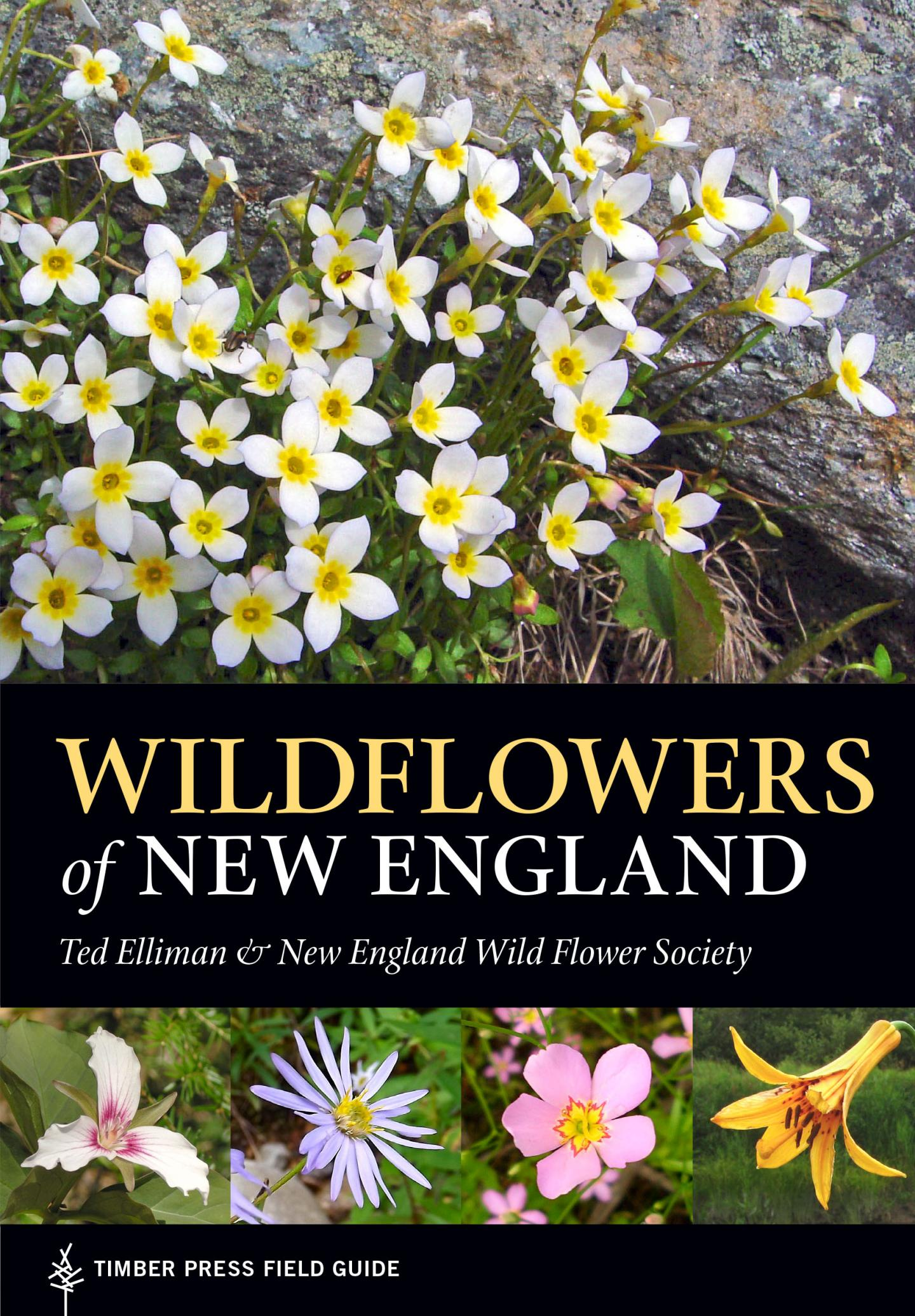 Comprehensive field guide to New England wild flowers is published ...