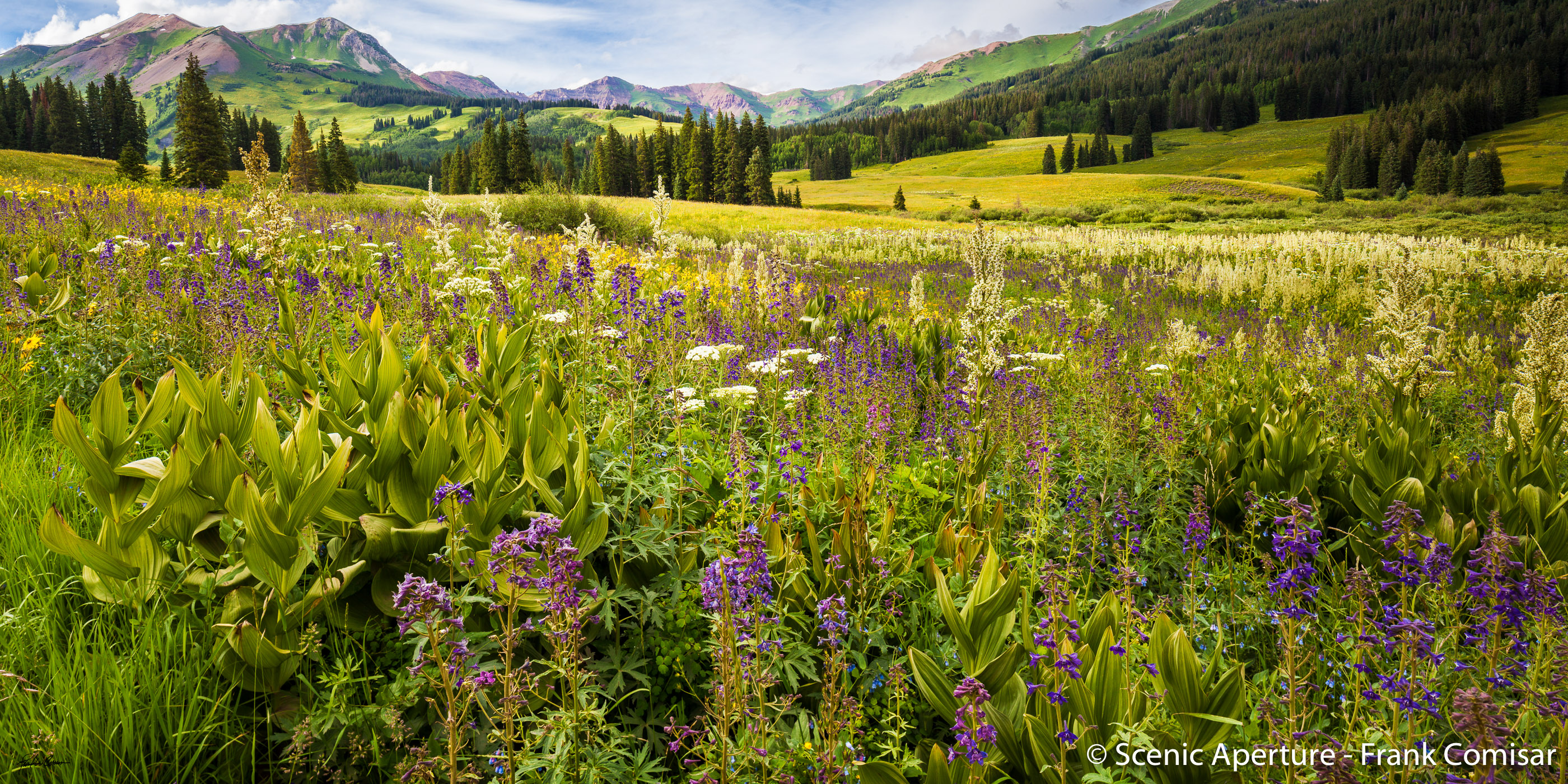 Crested Butte Wildflowers - Scenic Aperture Durango Gallery