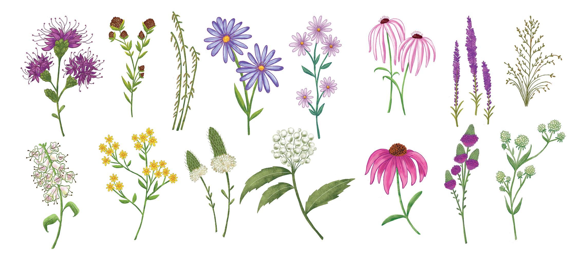 Free Photo Wild Flowers Flower Fresh Garden Free Download Jooinn