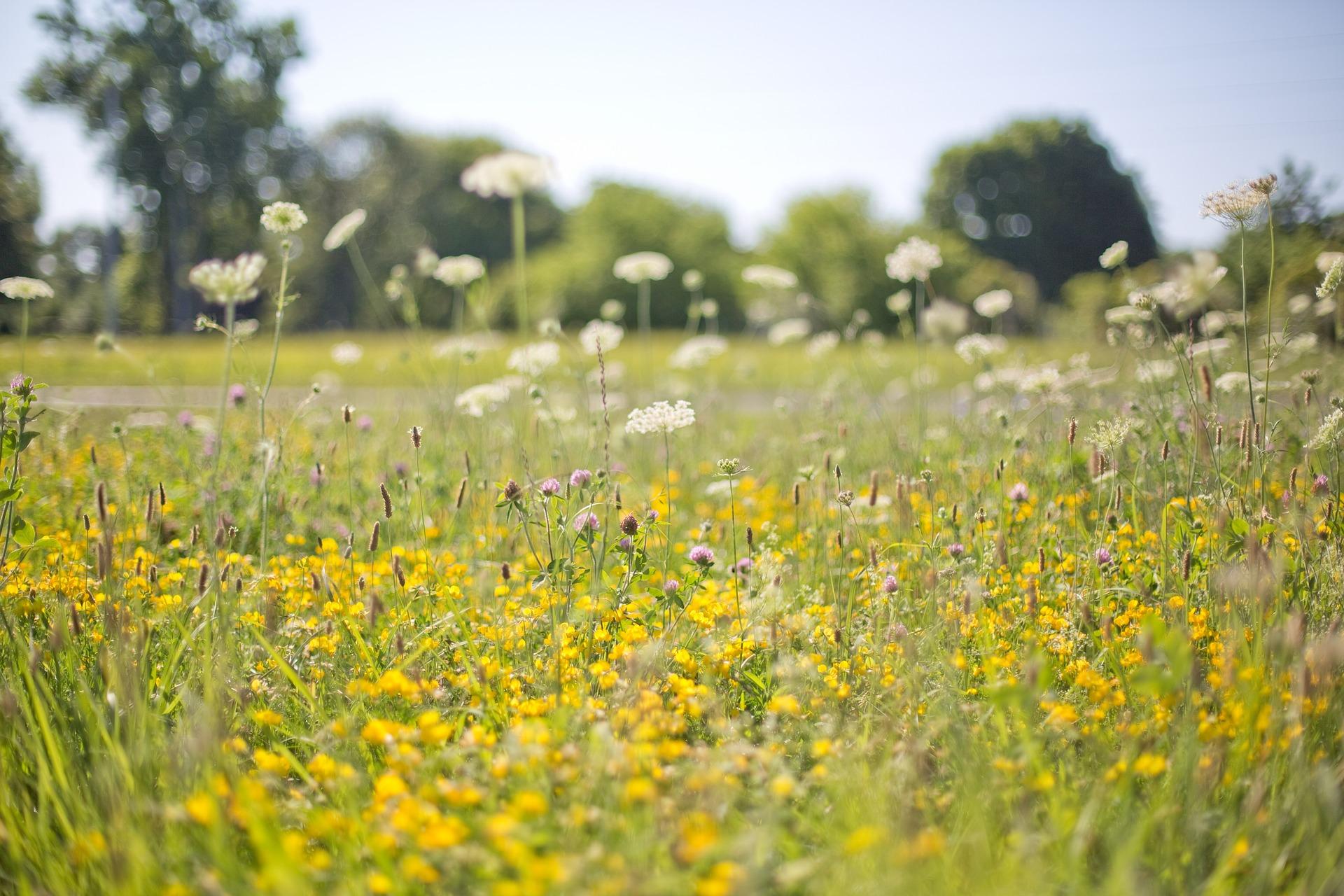 Wild Flowers, Nature, Wild, Garden, Fragrance, HQ Photo
