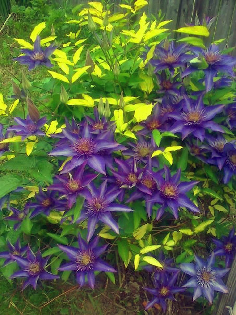 Wild flowers photo