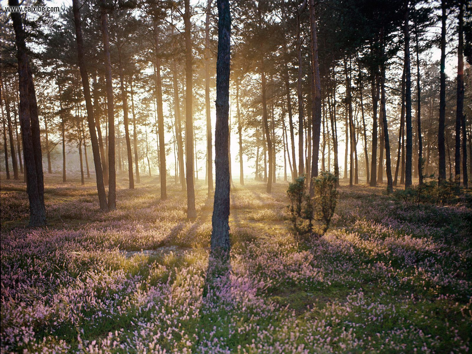 Nature: Sunlight And The Wild Forest Floor, picture nr. 17763