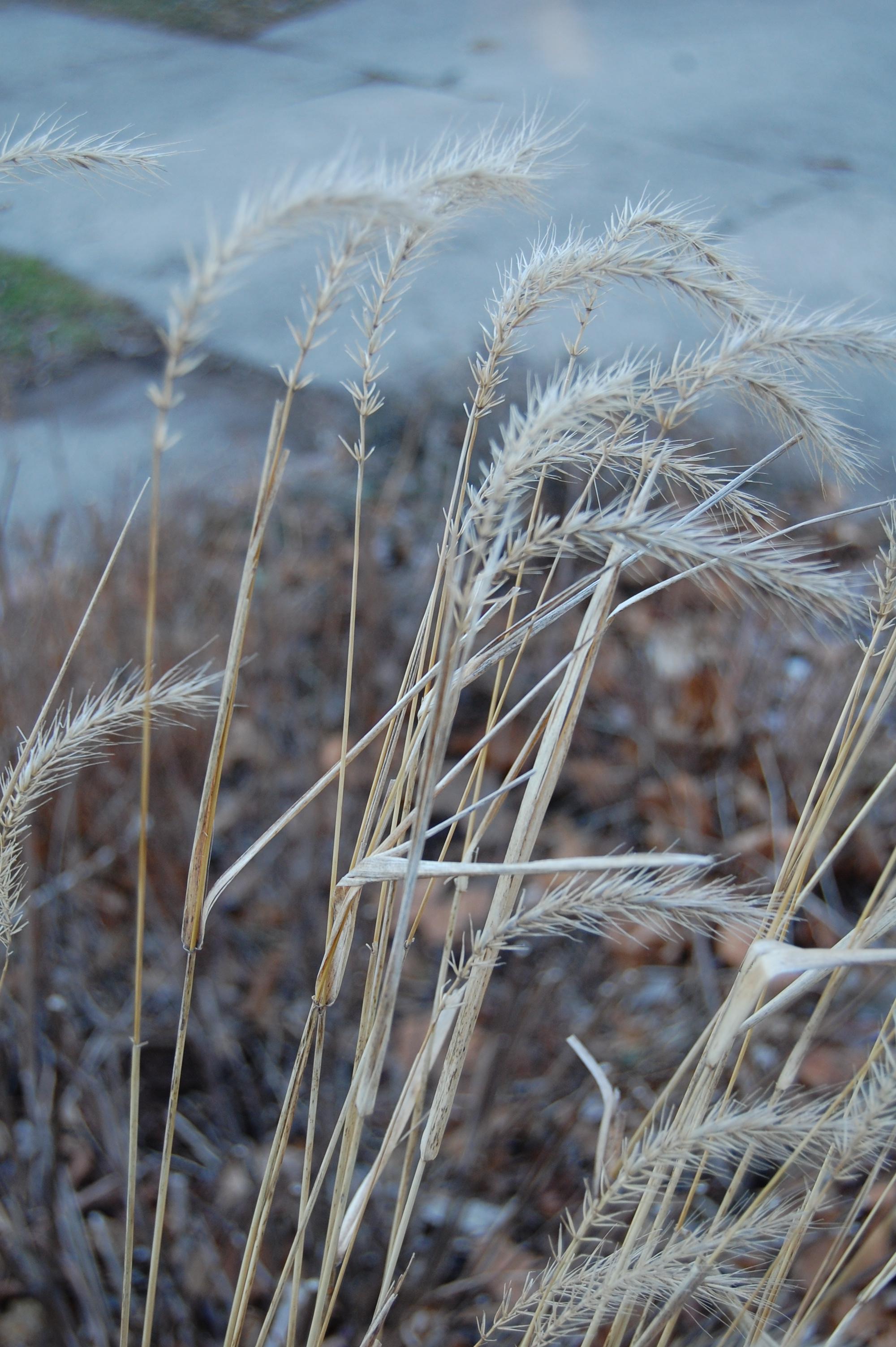 The Brown, Brown Stalks of Spring – gardeninacity