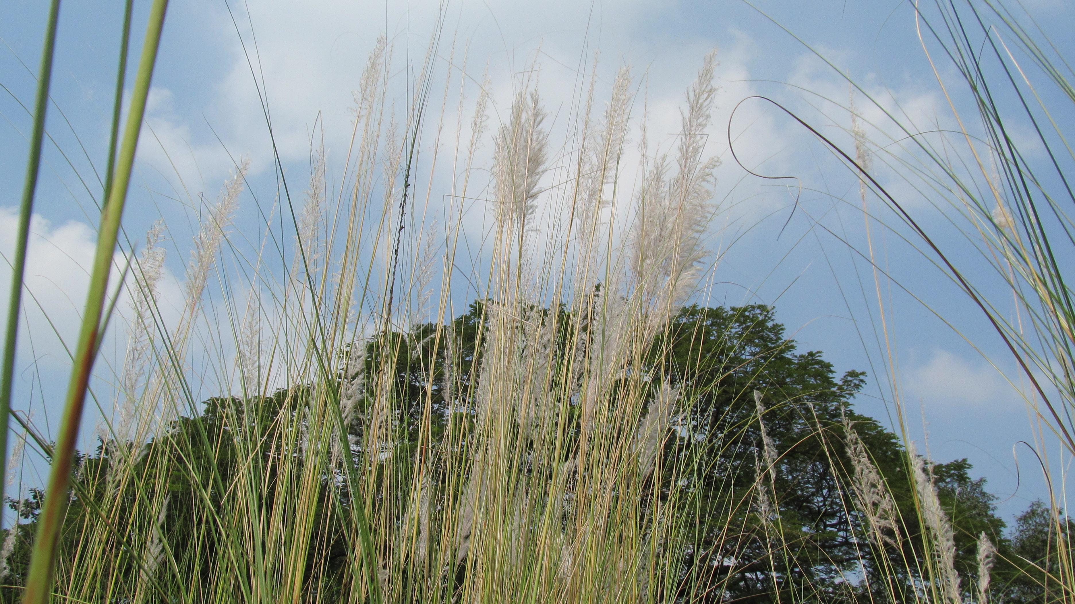 Wild grass photo