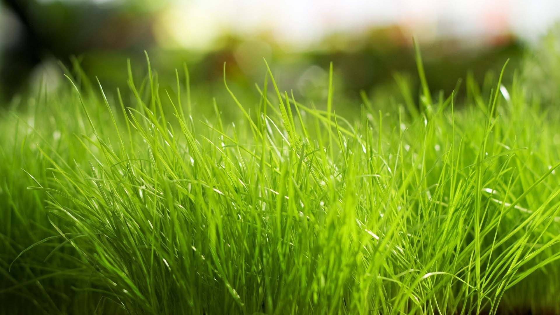 Wild Grass Closeup | HD Nature Wallpapers for Mobile and Desktop