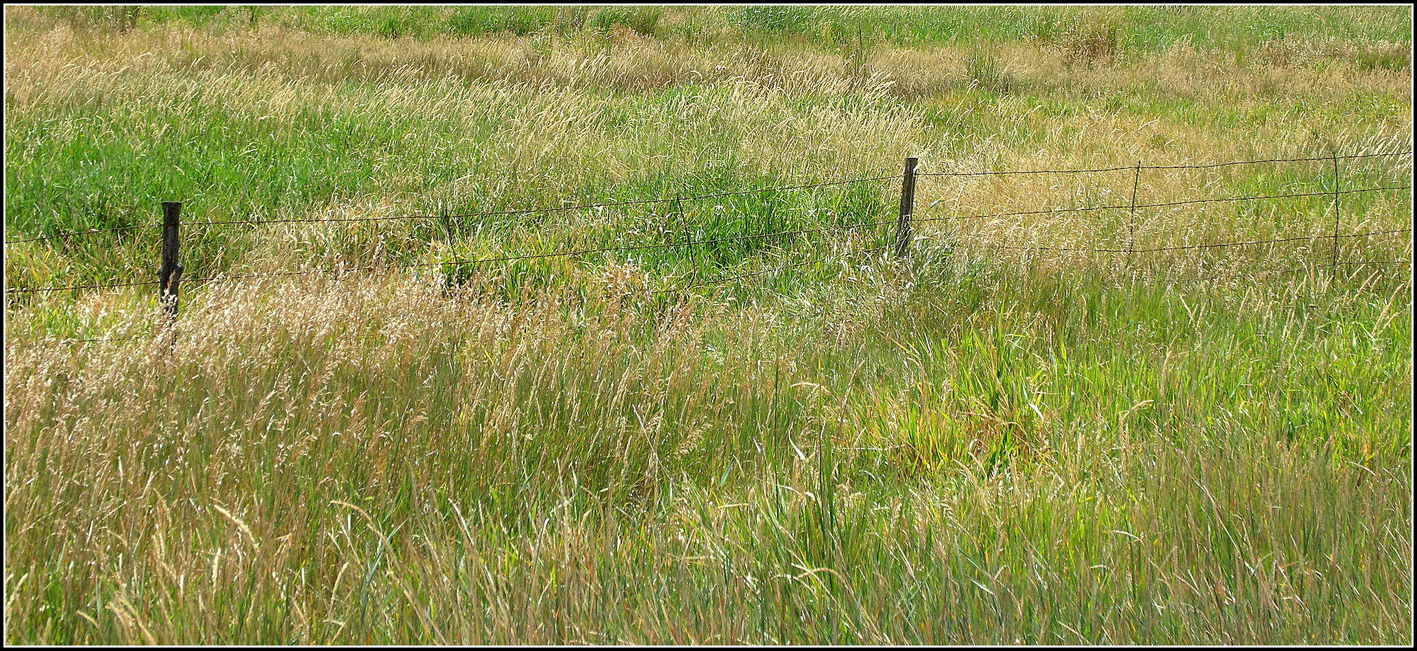 wild grass and fence line | Scott's Place...Images and Words