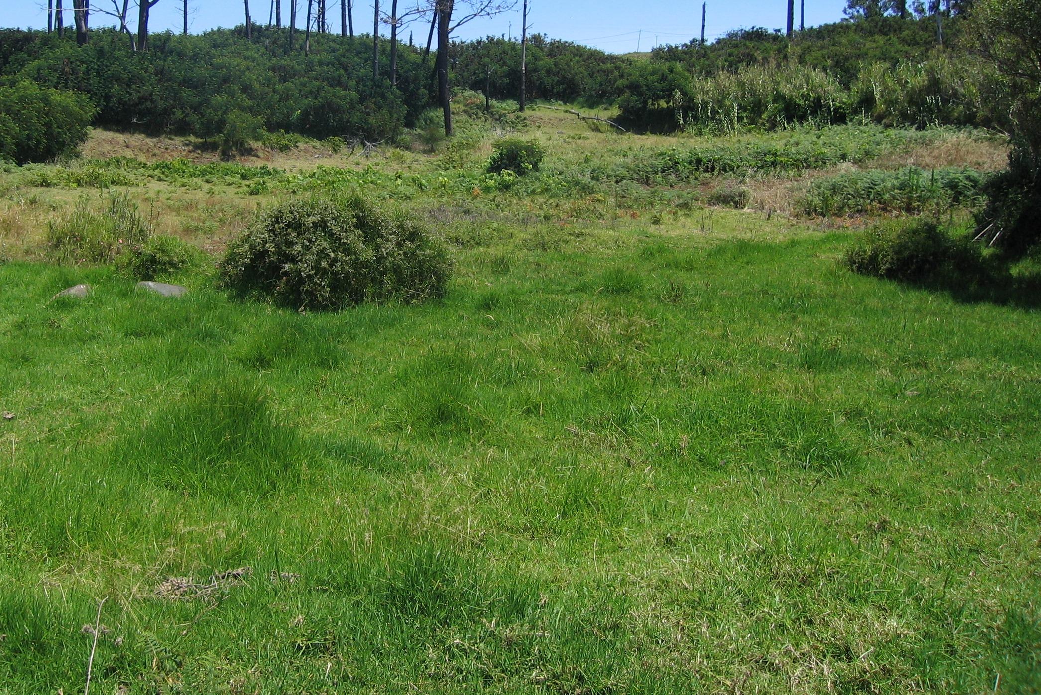 Jansen Golf Design -kikuyu grass golf architecture | Paul Jansen ...