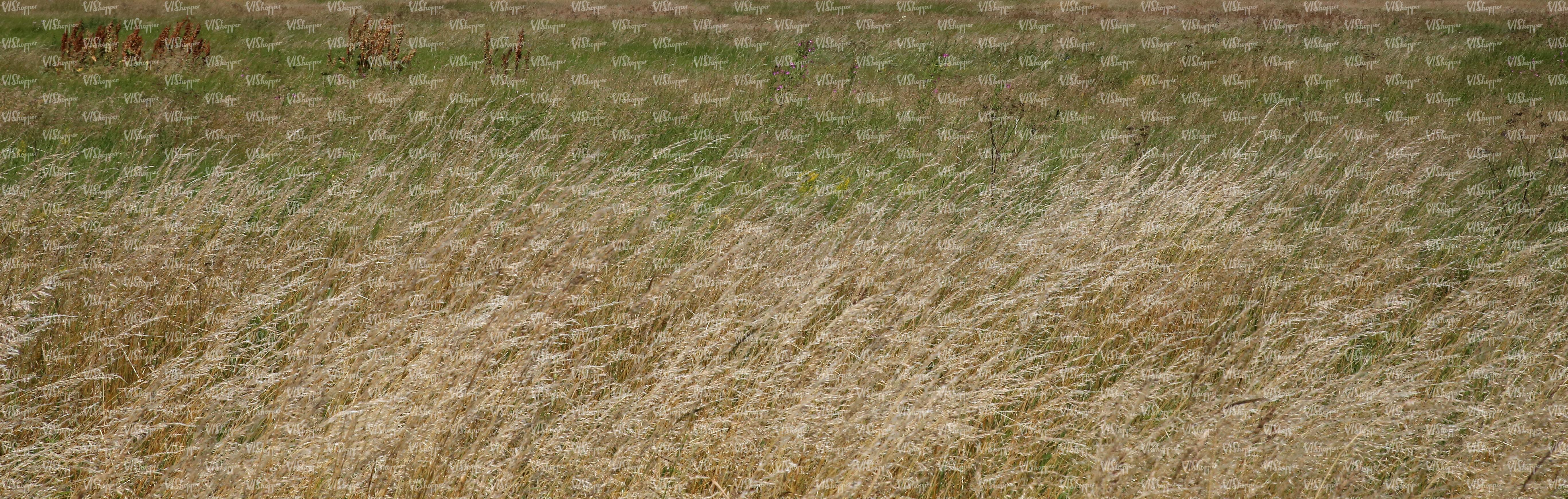 field of tall wild grass - ground textures - VIShopper