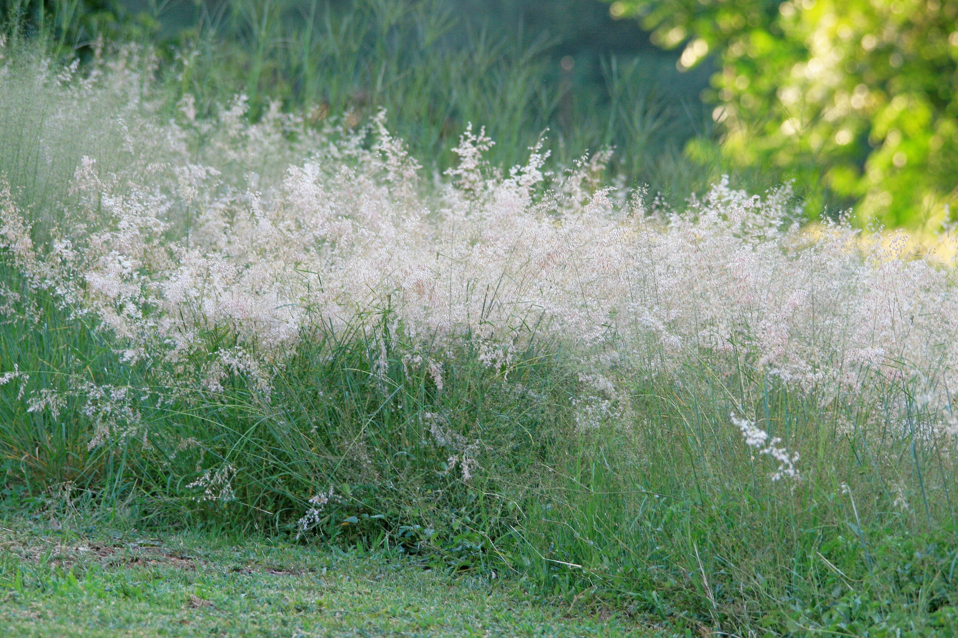 Tufts Of Wild Grass Free Stock Photo - Public Domain Pictures