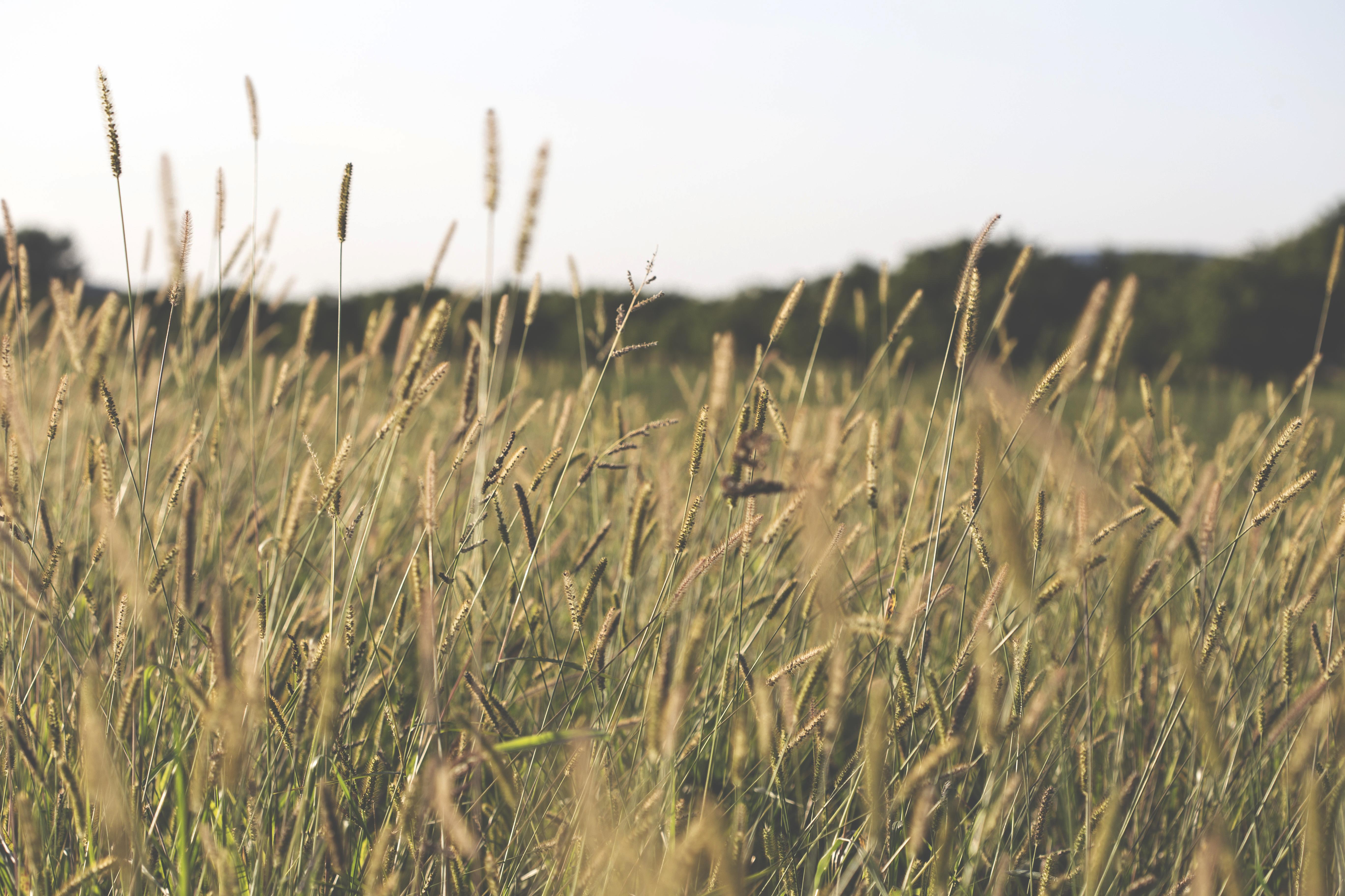 Wild Grass, Field, Grass, Green, Nature, HQ Photo