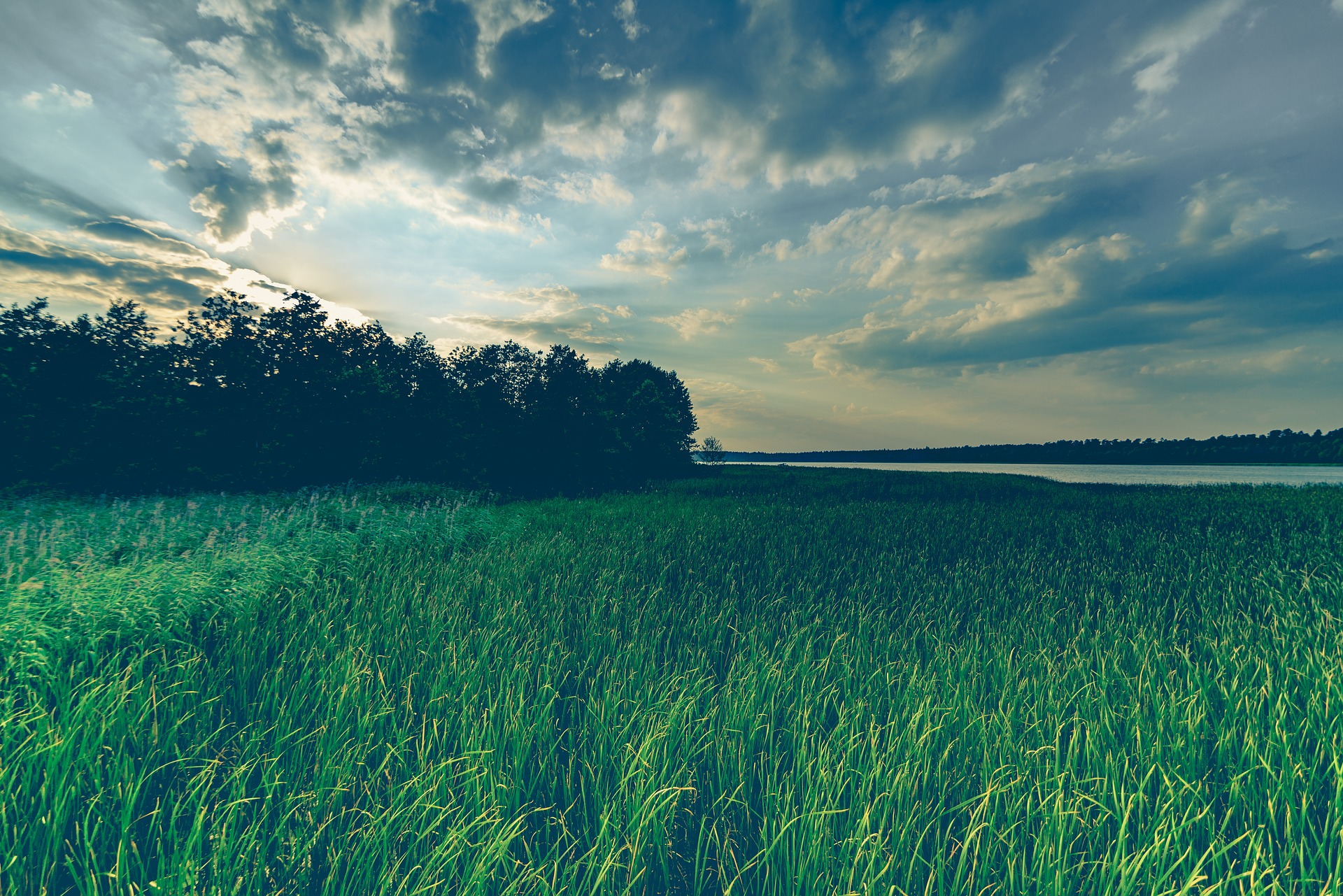 Wild Grass, Fresh, Grass, Green, Lake, HQ Photo