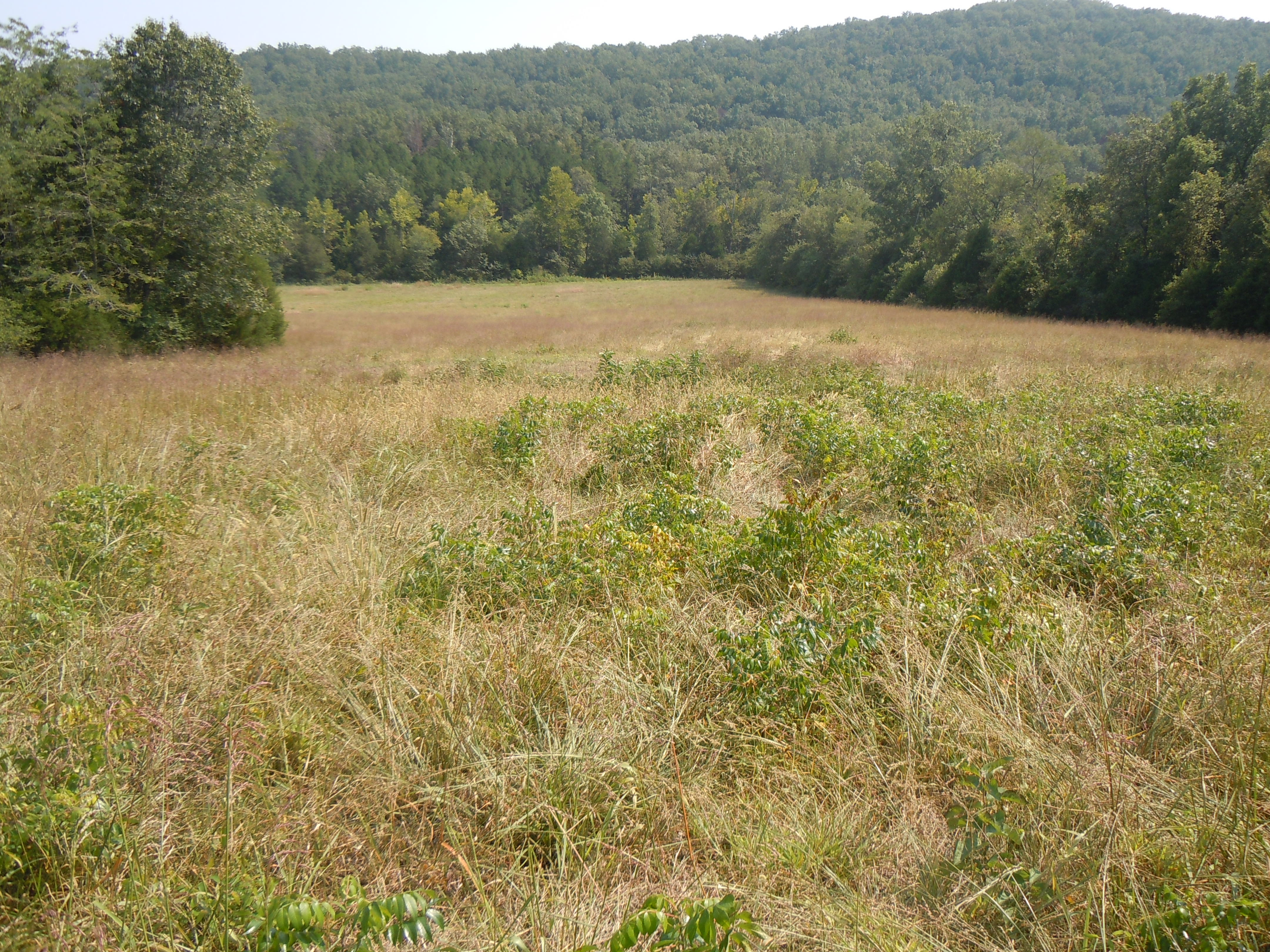 Cooperative field restoration promotes local economy and wildlife ...