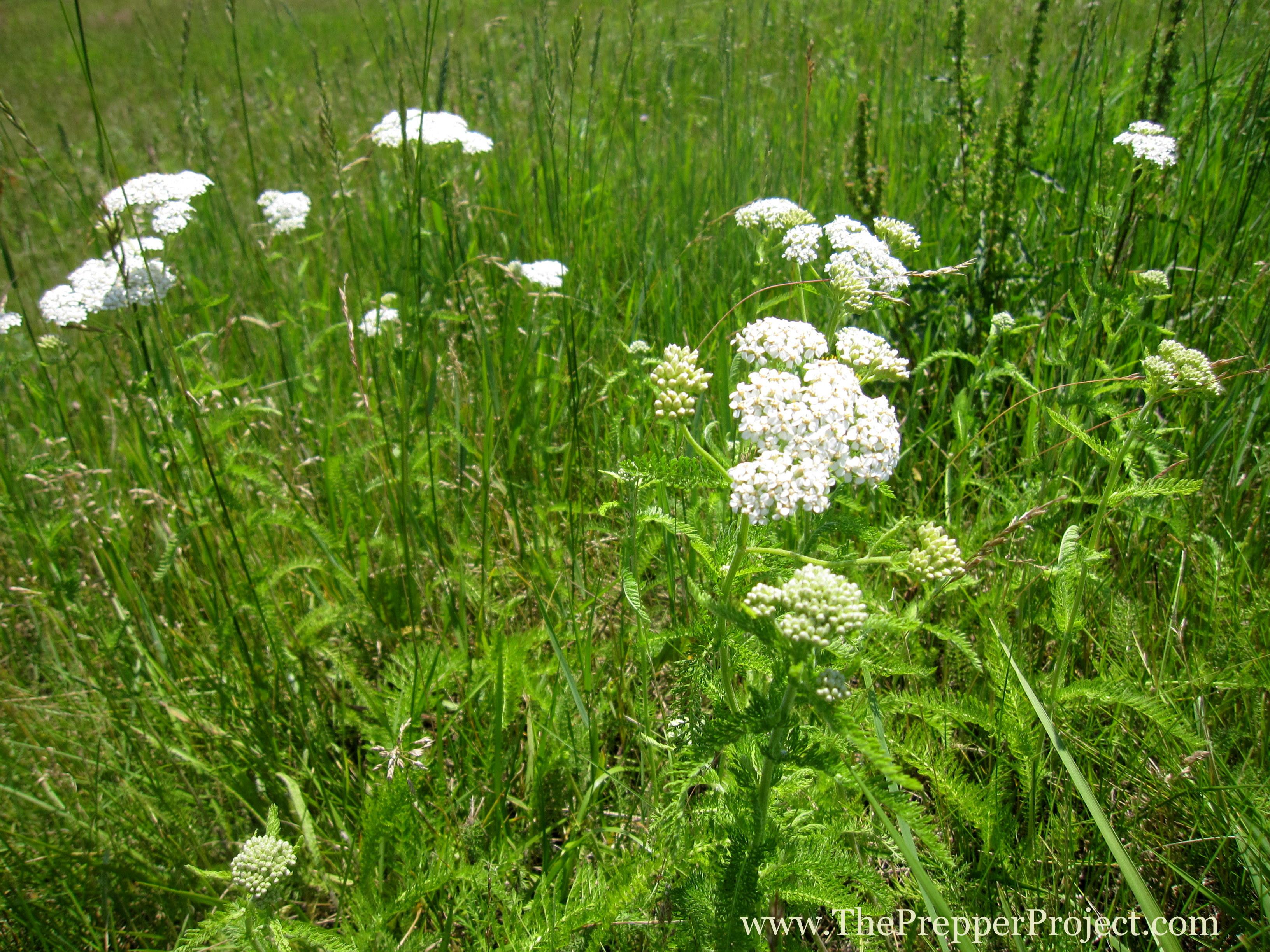 Wild plants photo