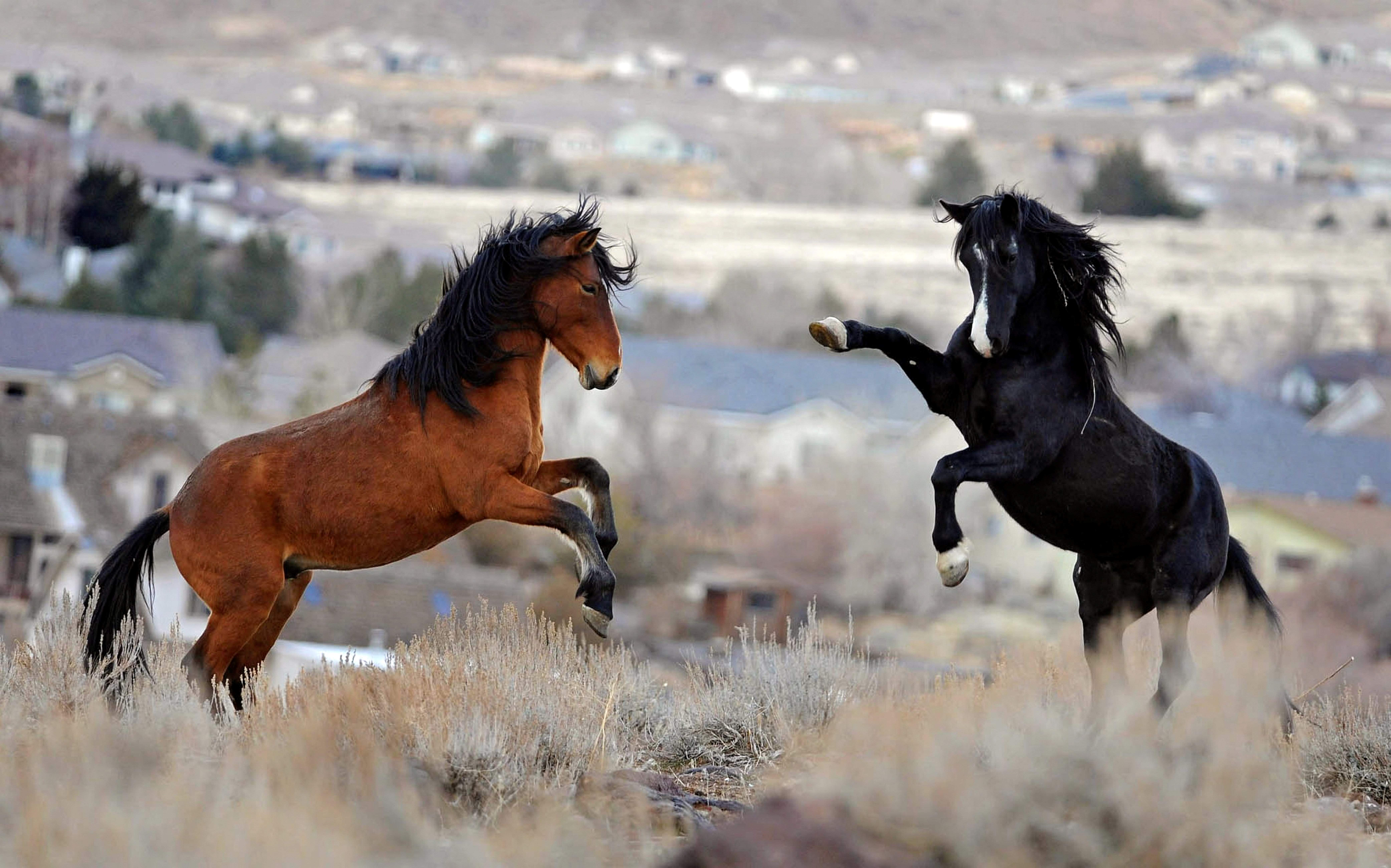 Congressional committee votes to allow destruction of wild horses