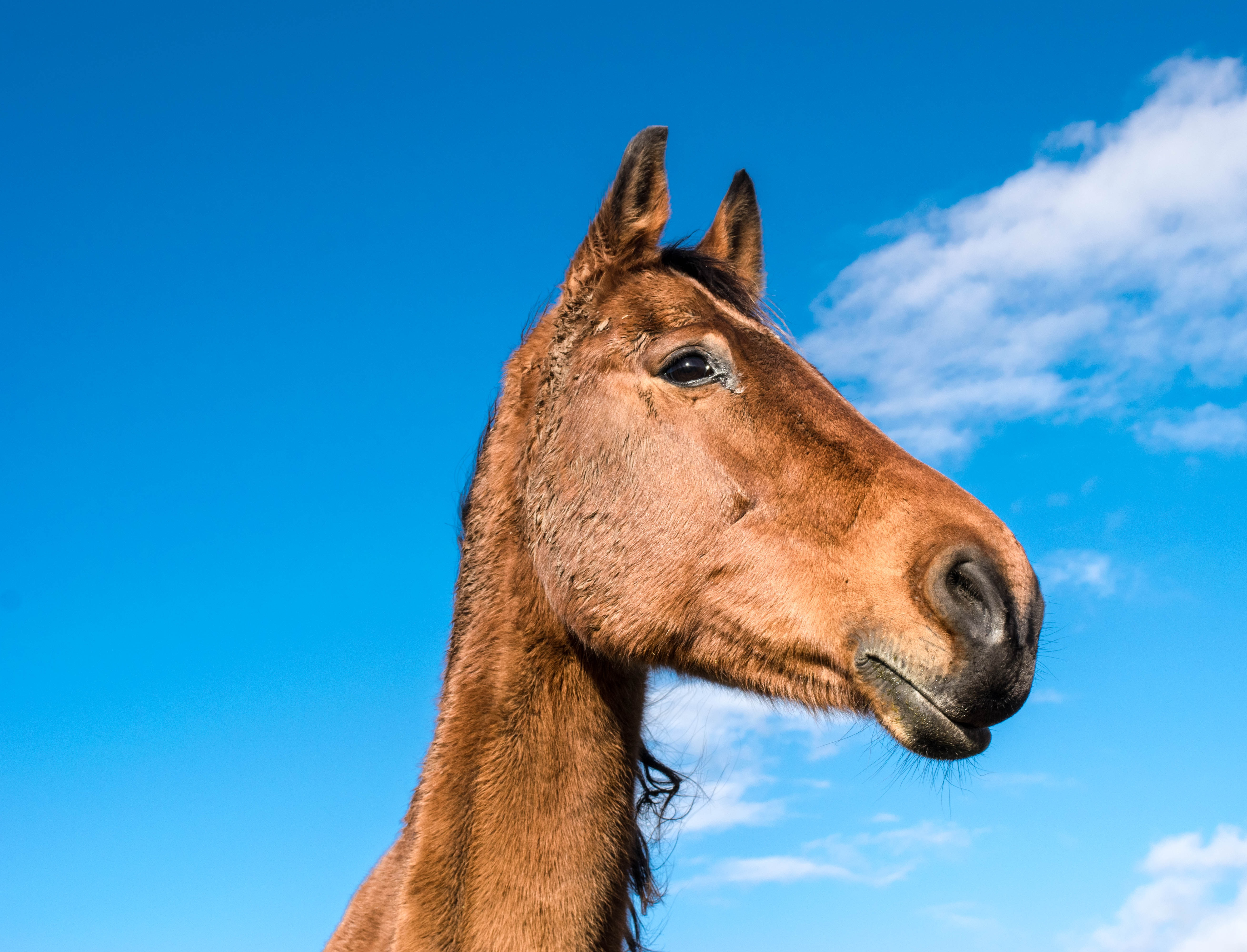 Wild Horse, Animal, Farm, Horse, Nature, HQ Photo