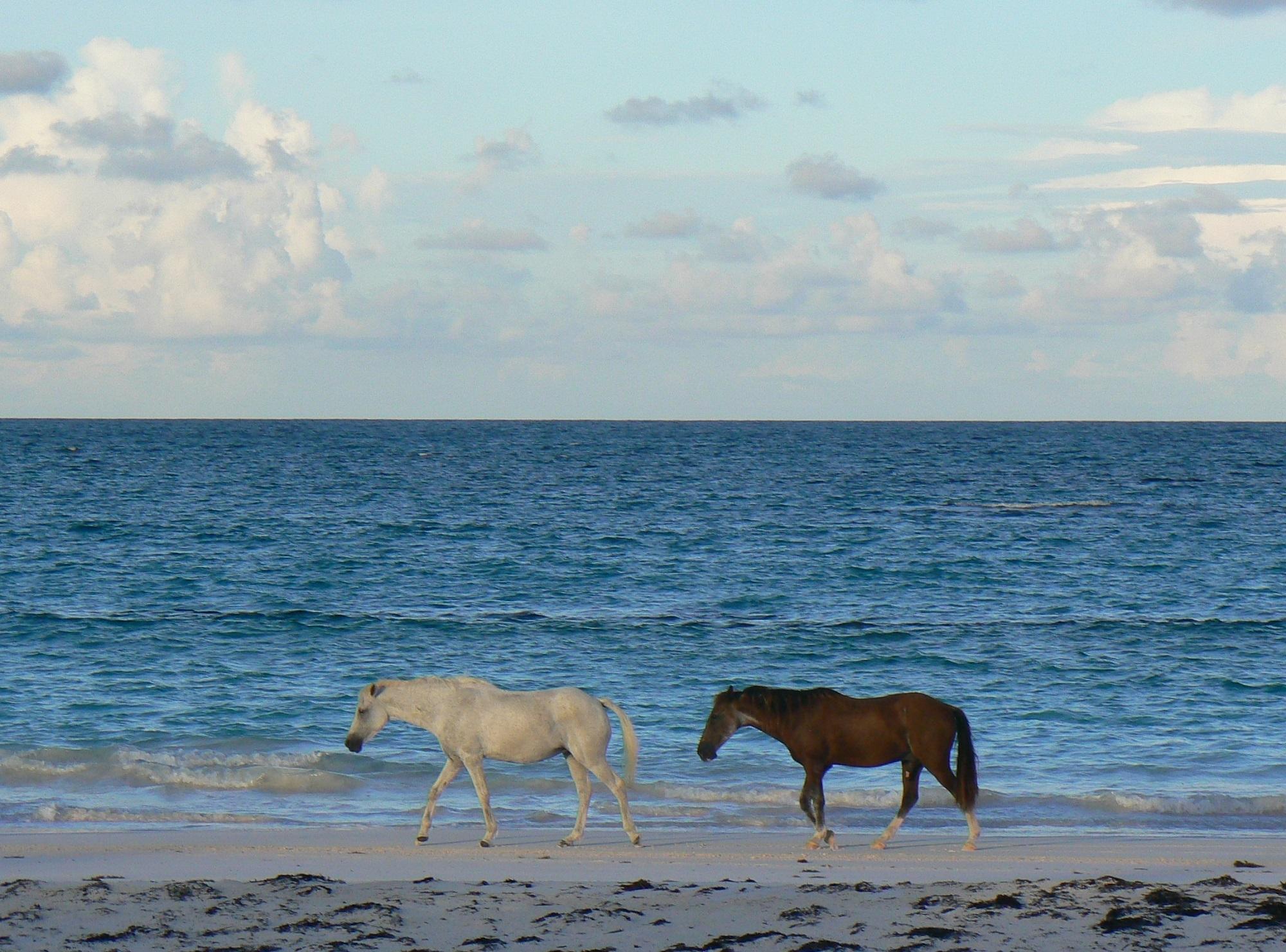 Wild horses on the shore photo
