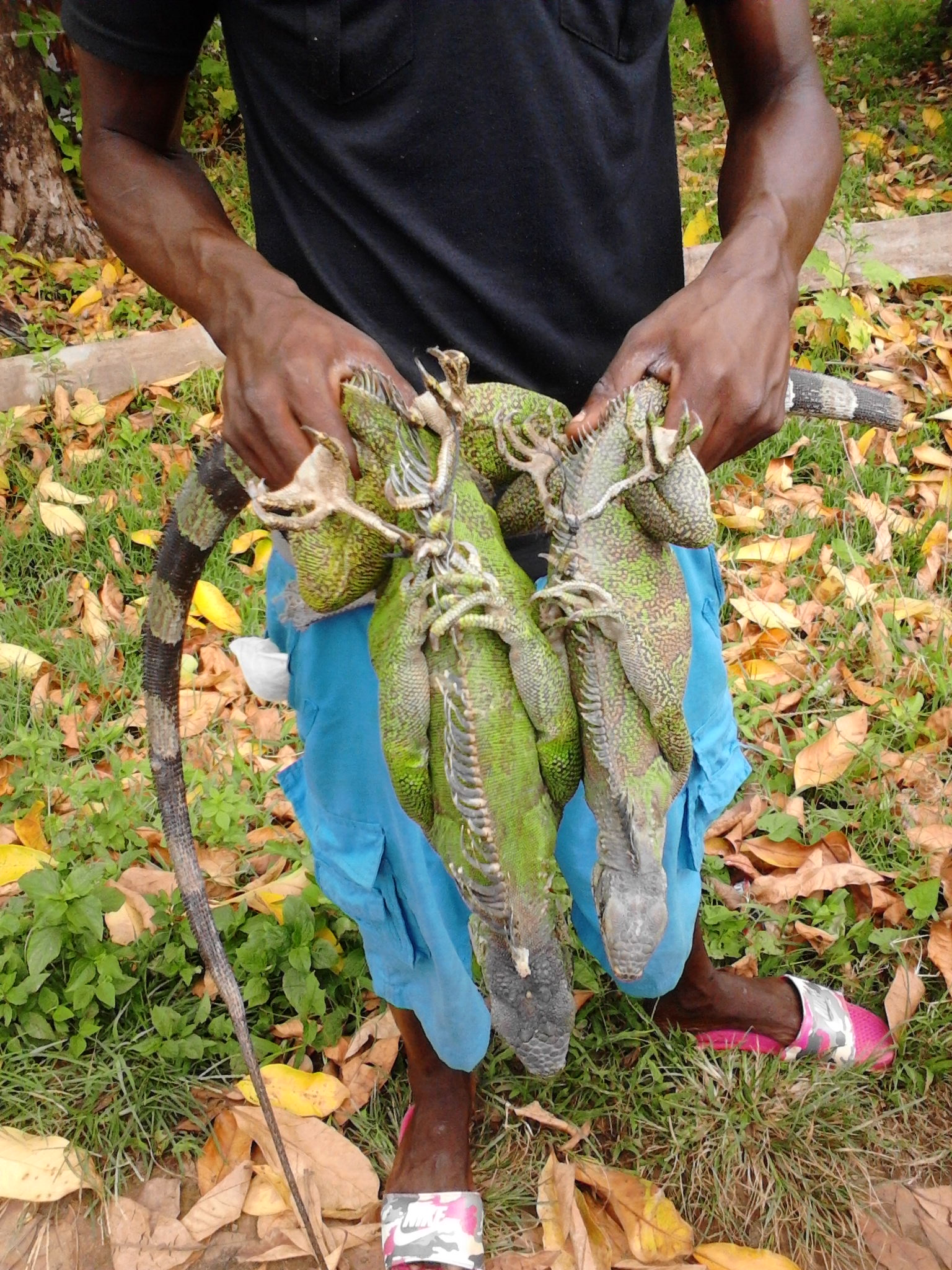 today's menu special iguana #guyana – mark jacobs lives!