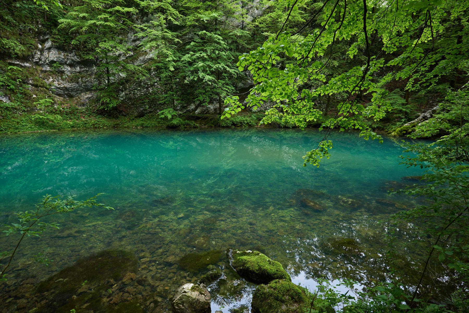 Wild lake photo