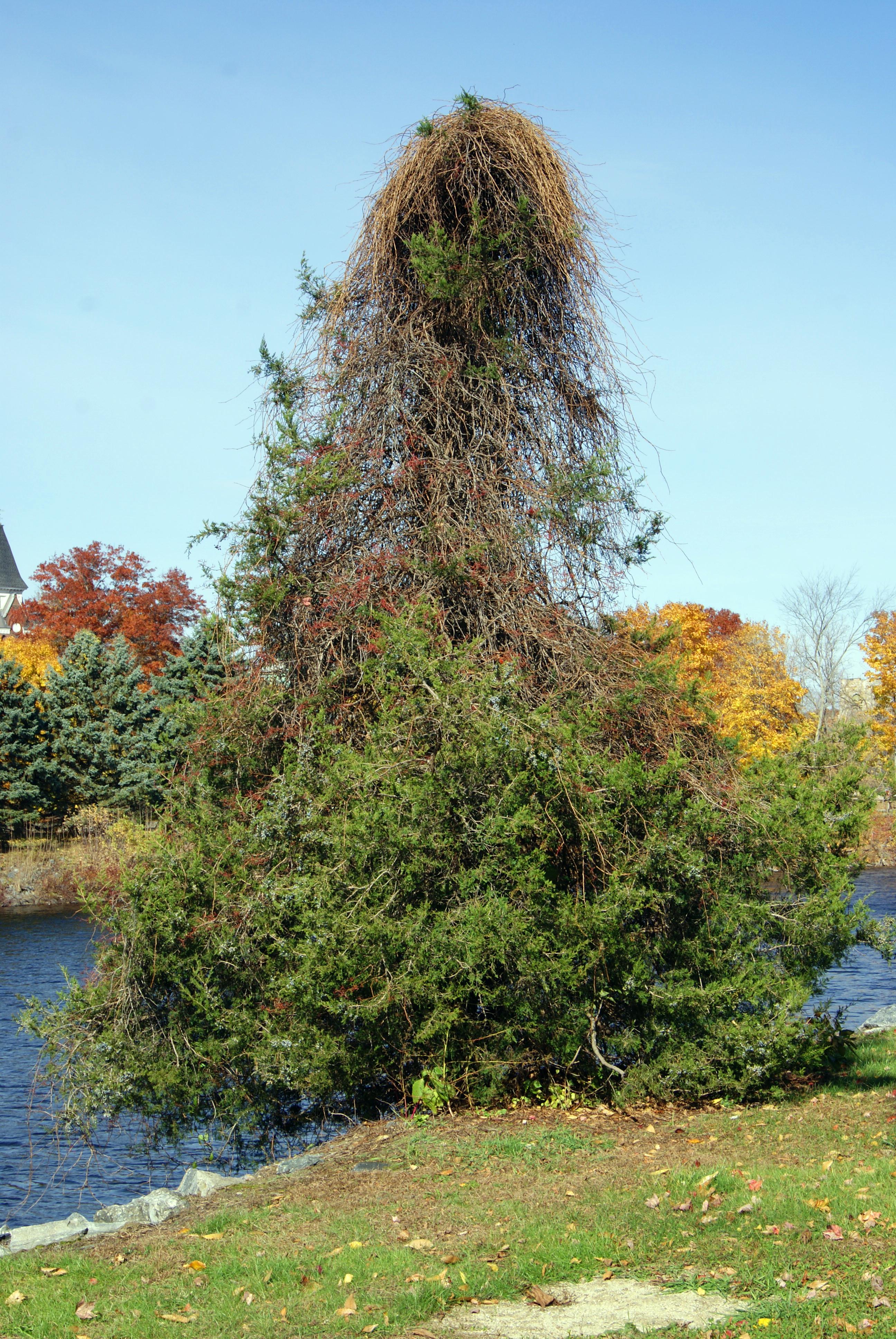 Wild looking tree photo