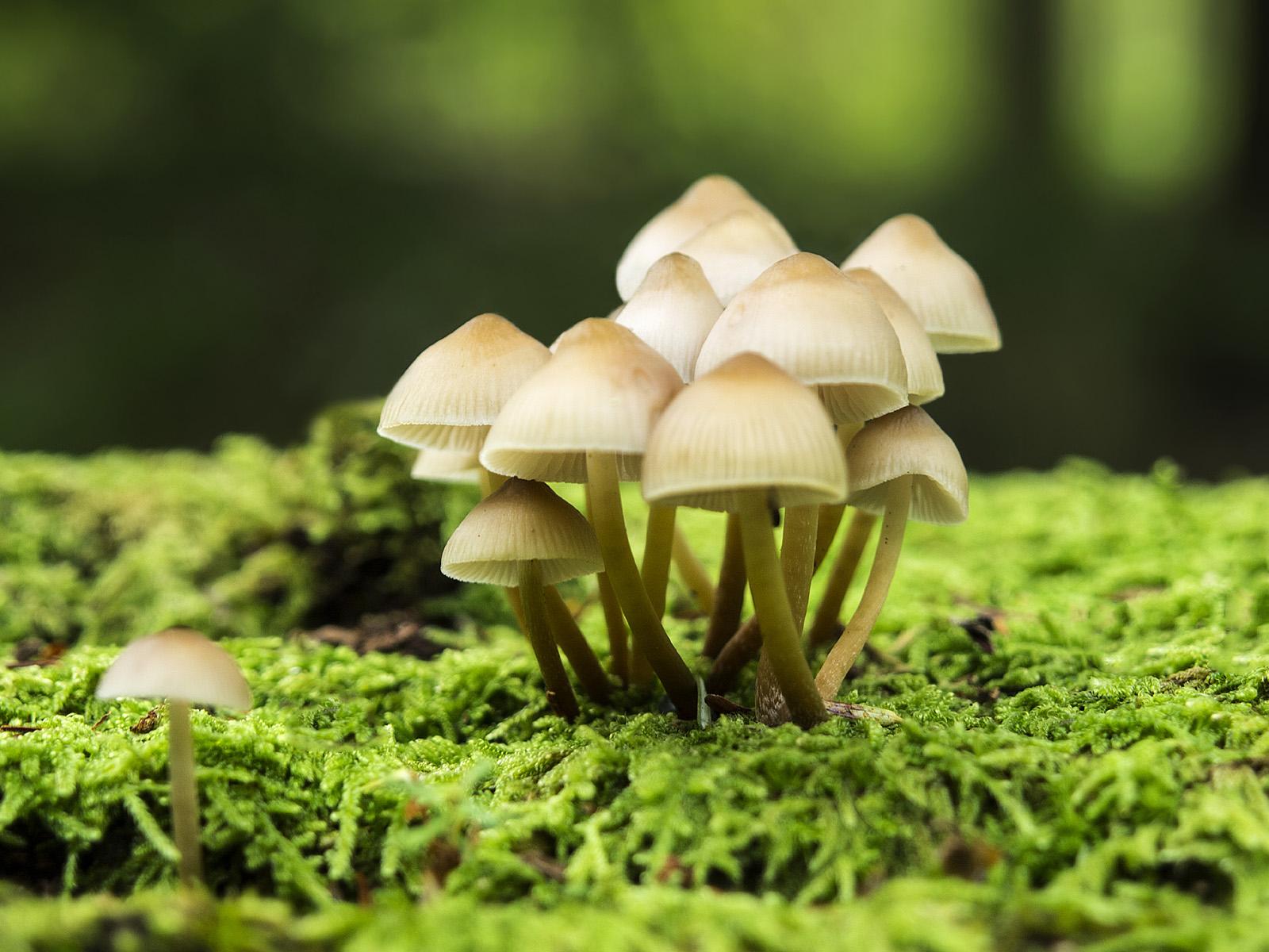 Wild mushrooms 49395 - Mushroom fungus - Harvest season