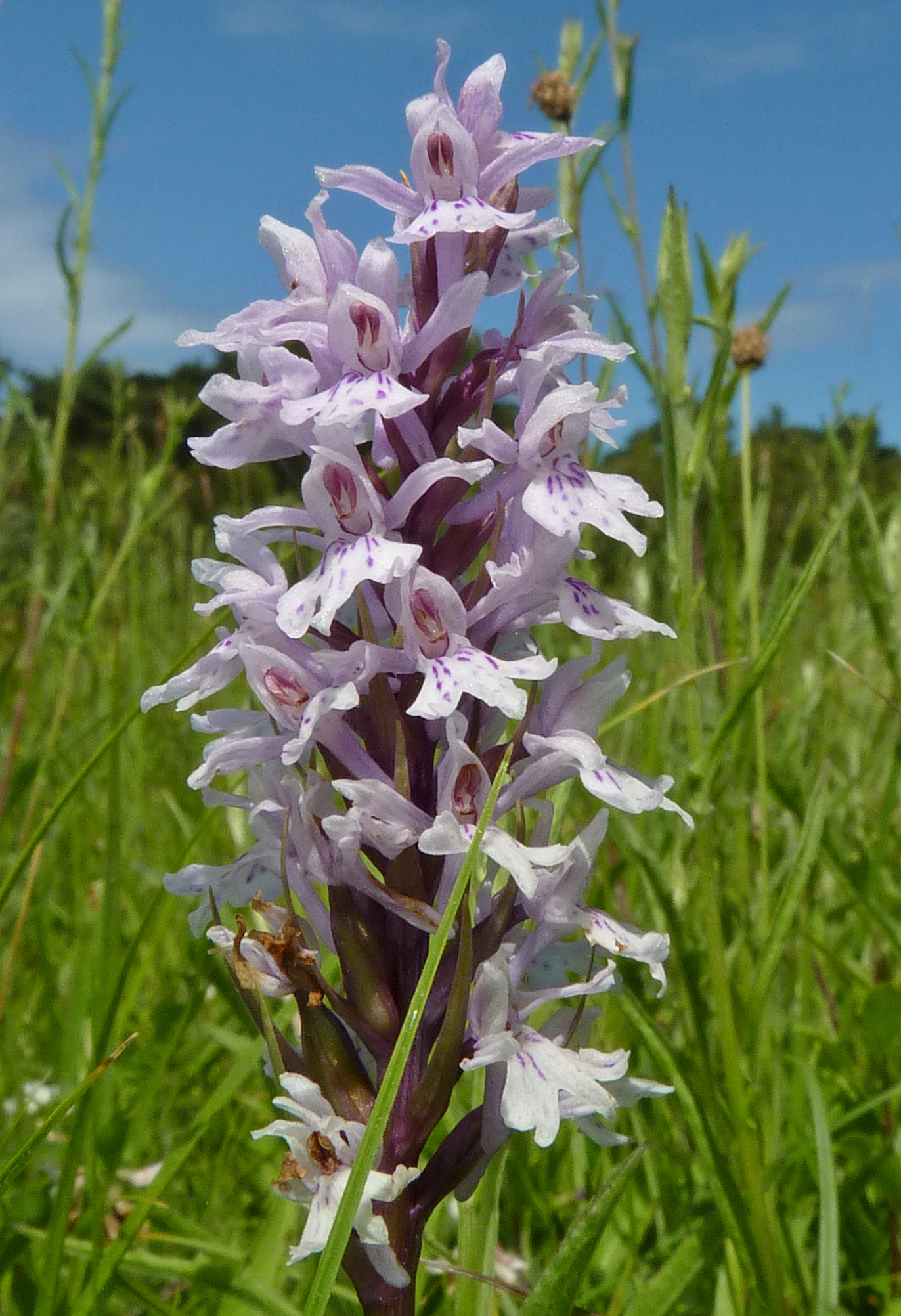 NaturePlus: Seen any good orchids lately?