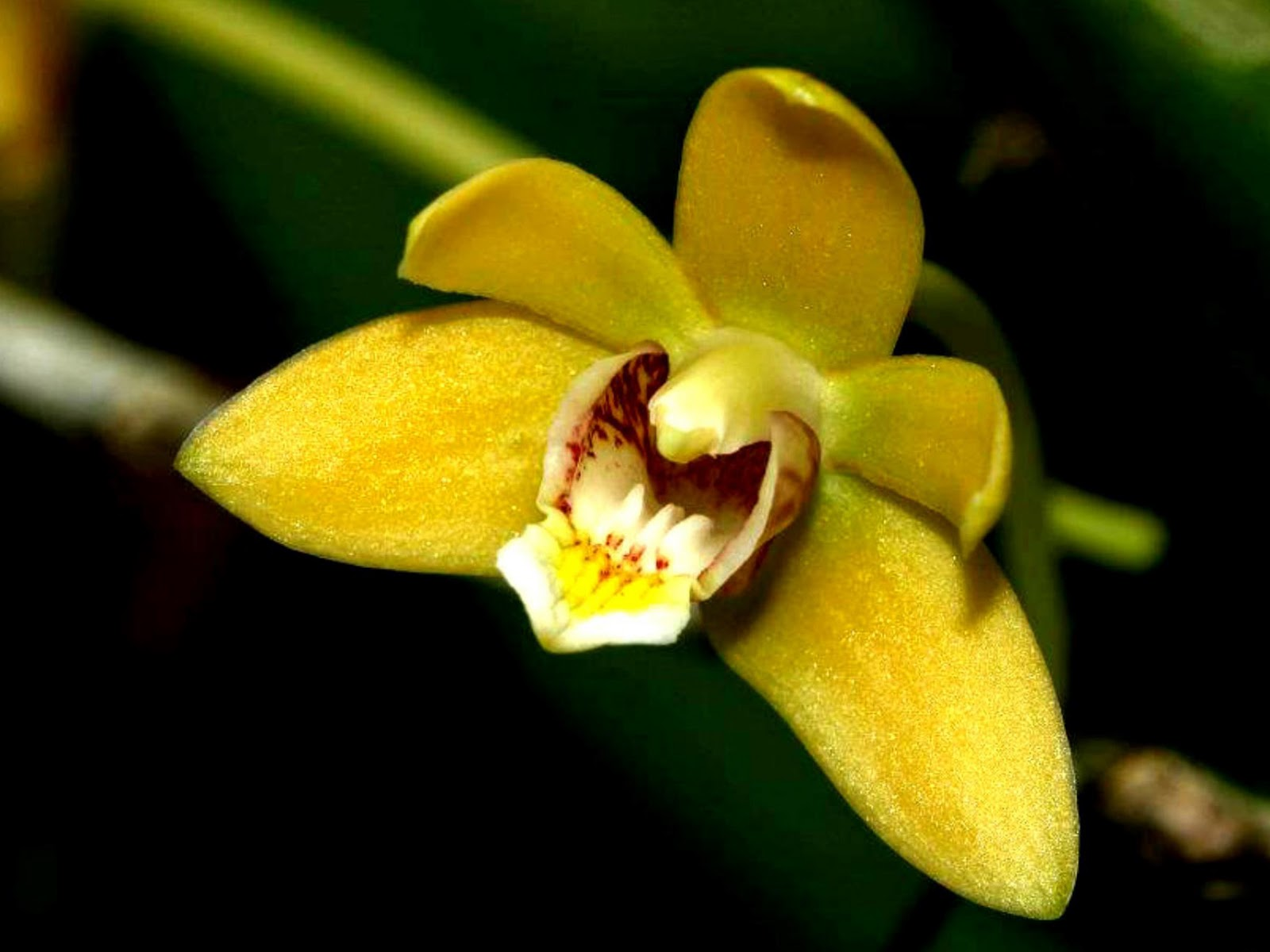 Wild orchid photo