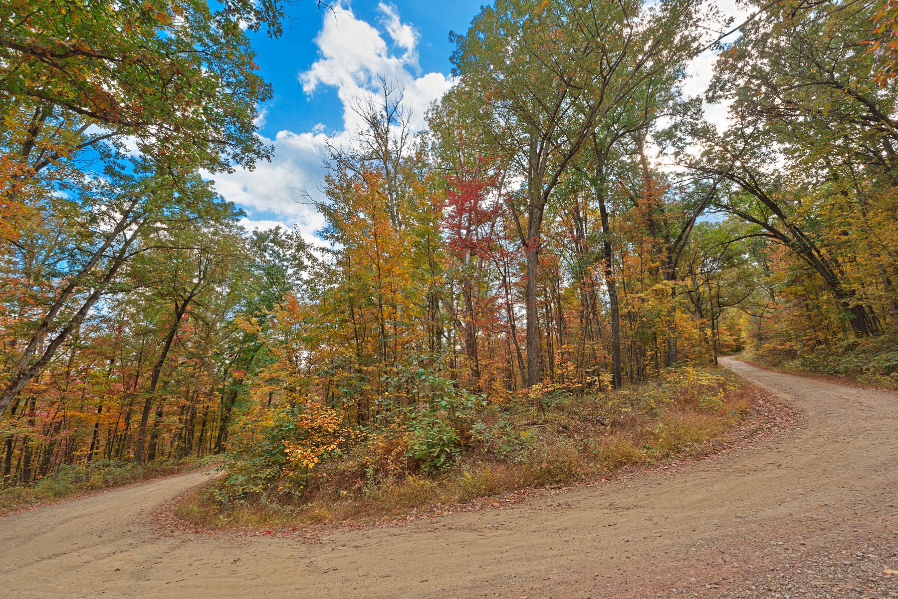 Winding autumn forest road  - hdr photo
