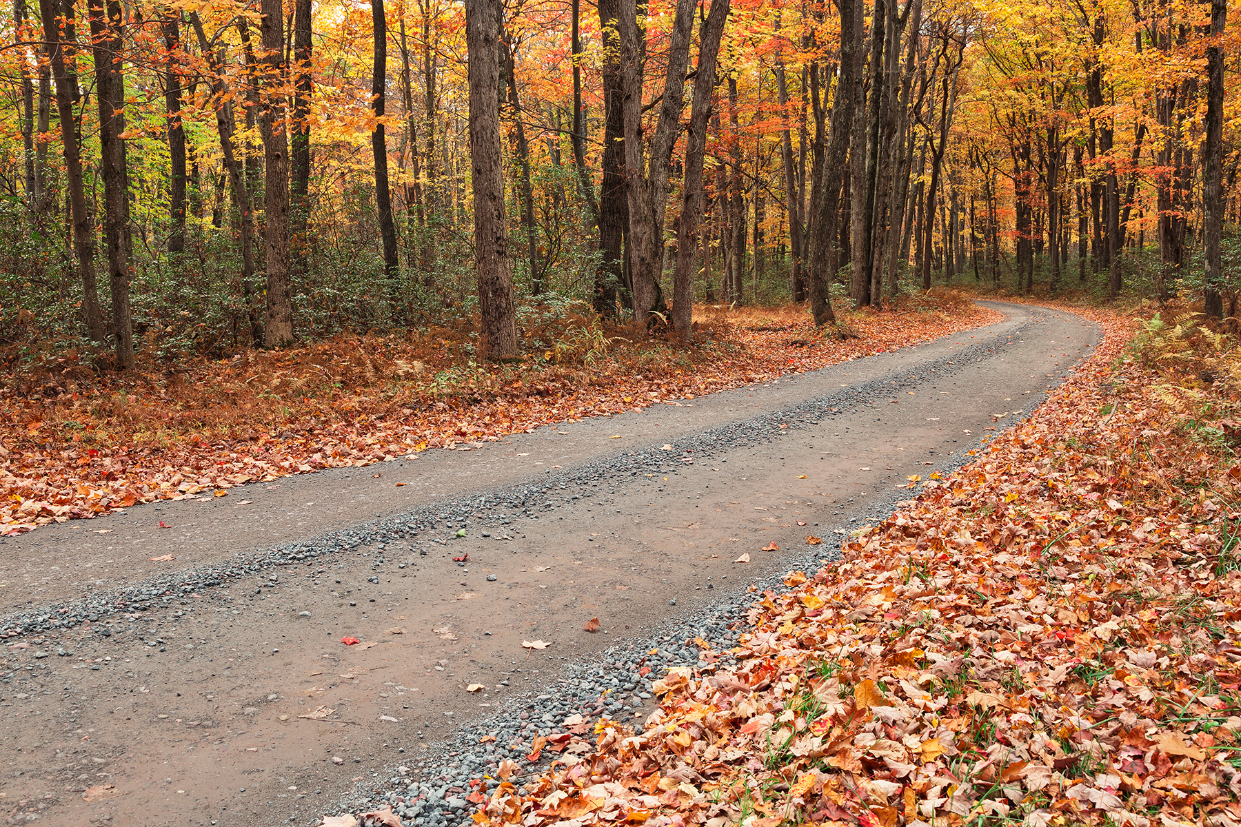Winding autumn forest road - hickory run photo