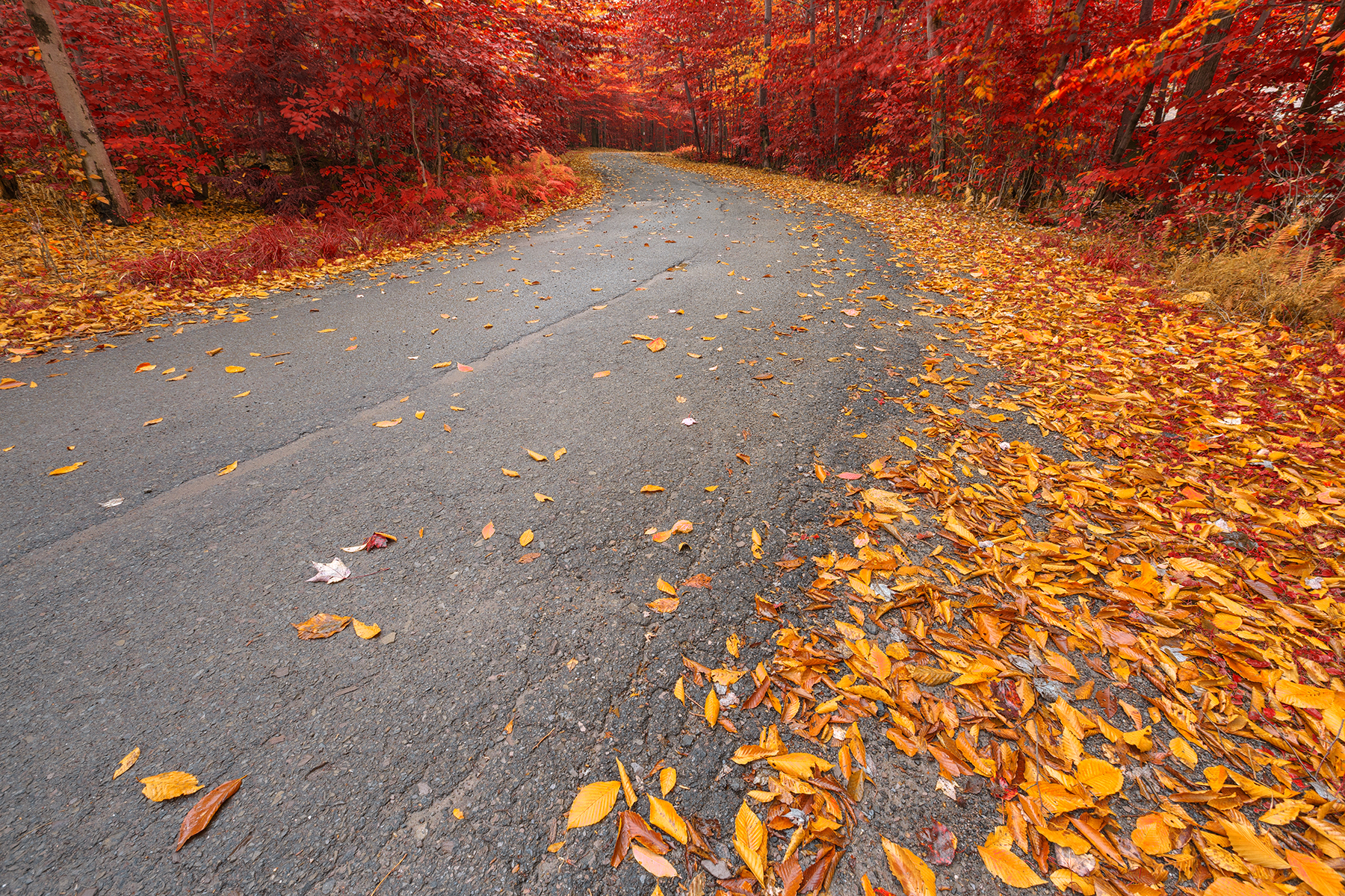 Winding autumn forest road - ruby gold hdr photo