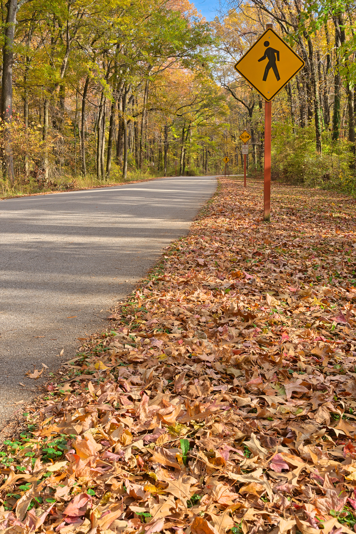 Winding Autumn Road - HDR, , Post, Shade, Serenity, HQ Photo