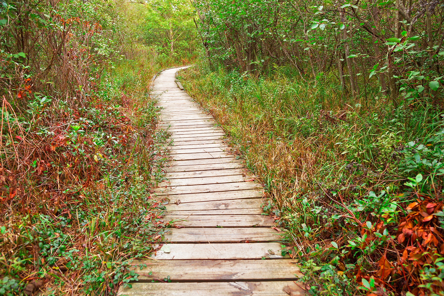 Winding boardwalk trail - dolly sods photo