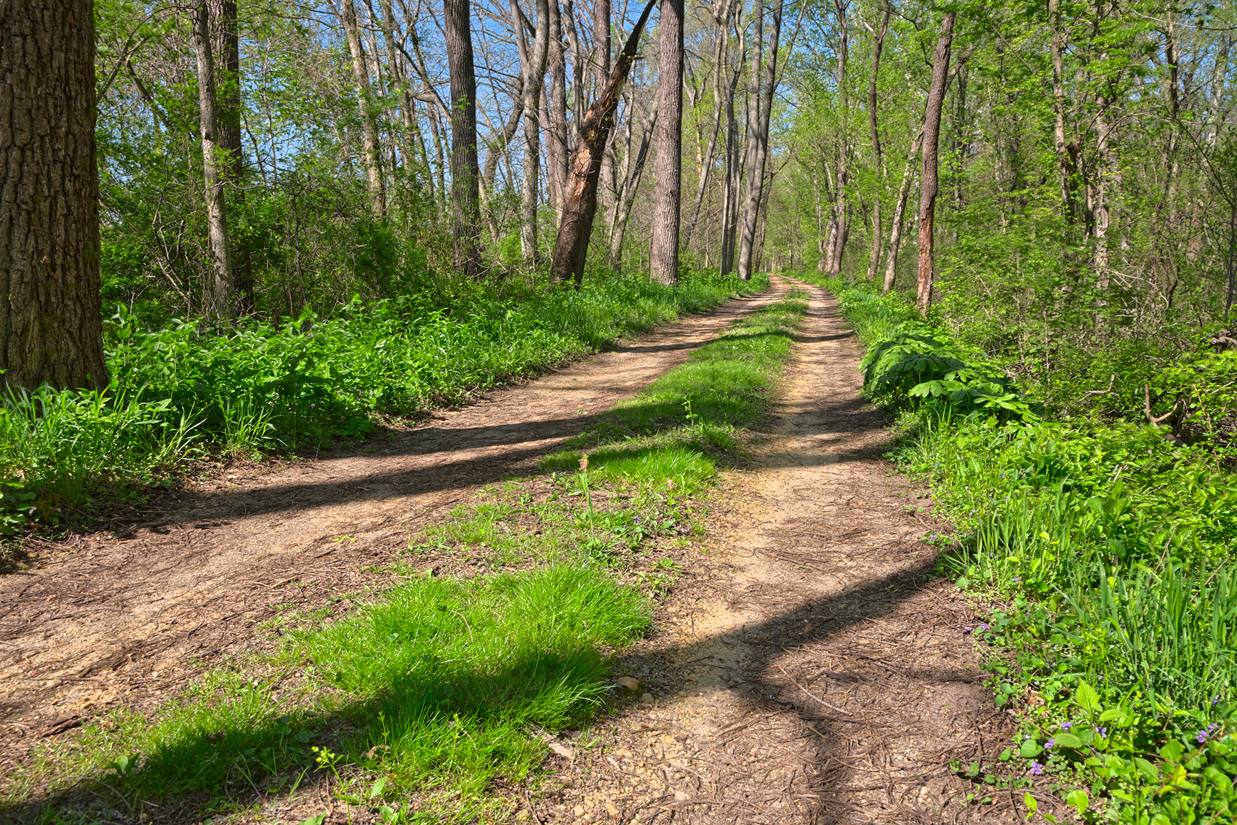Winding spring trail - hdr photo