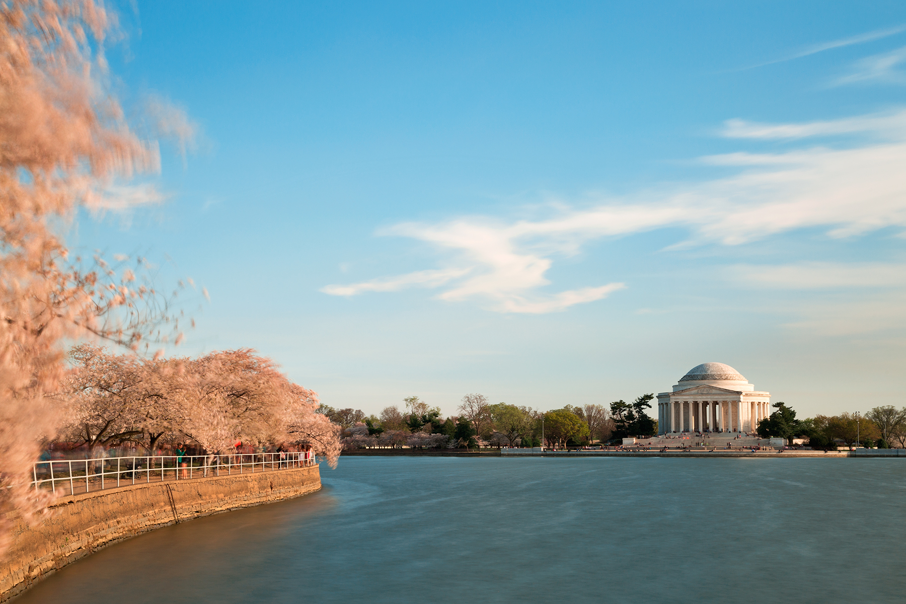 Windy cherry blossom basin photo