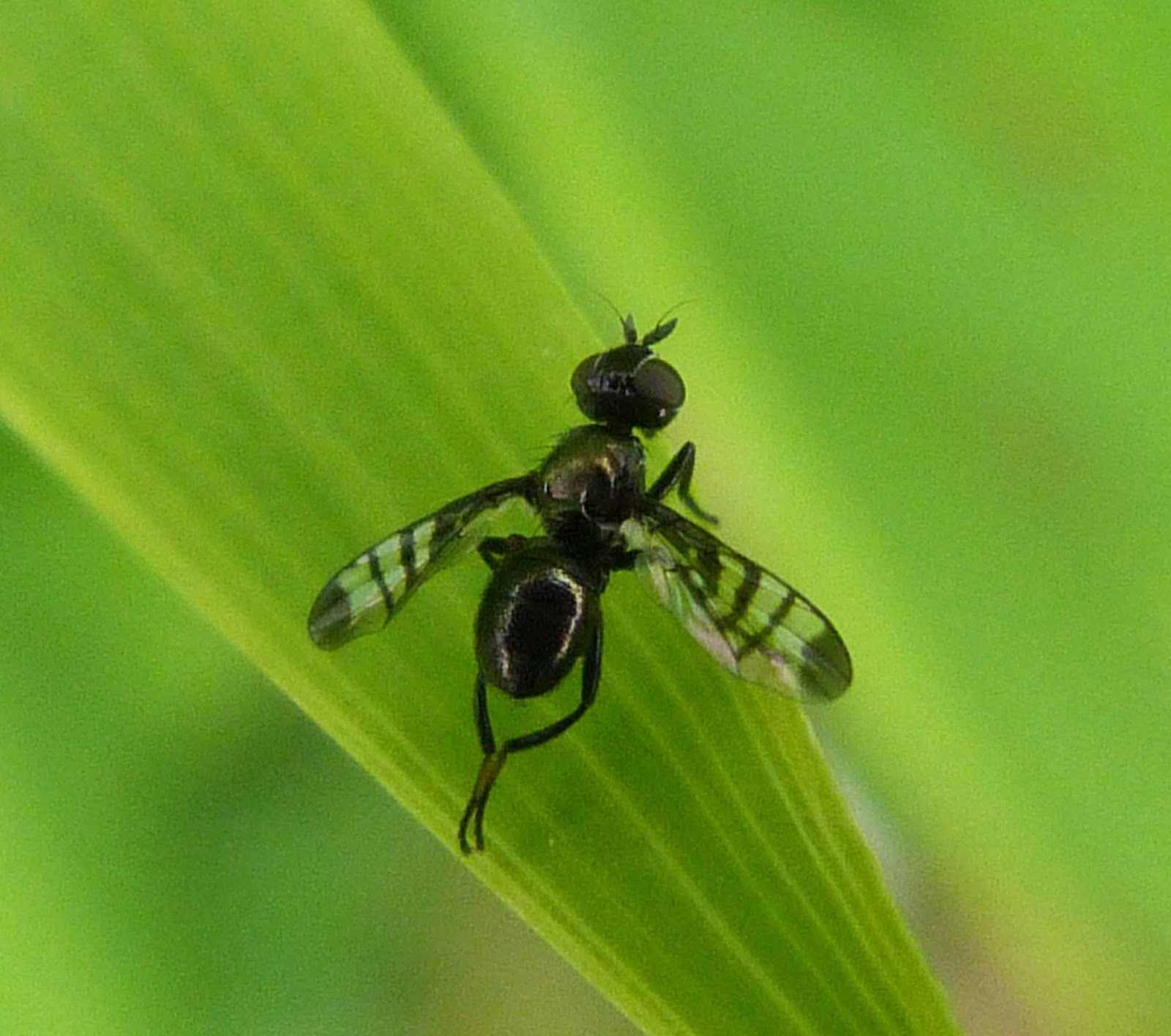 Winged insect photo
