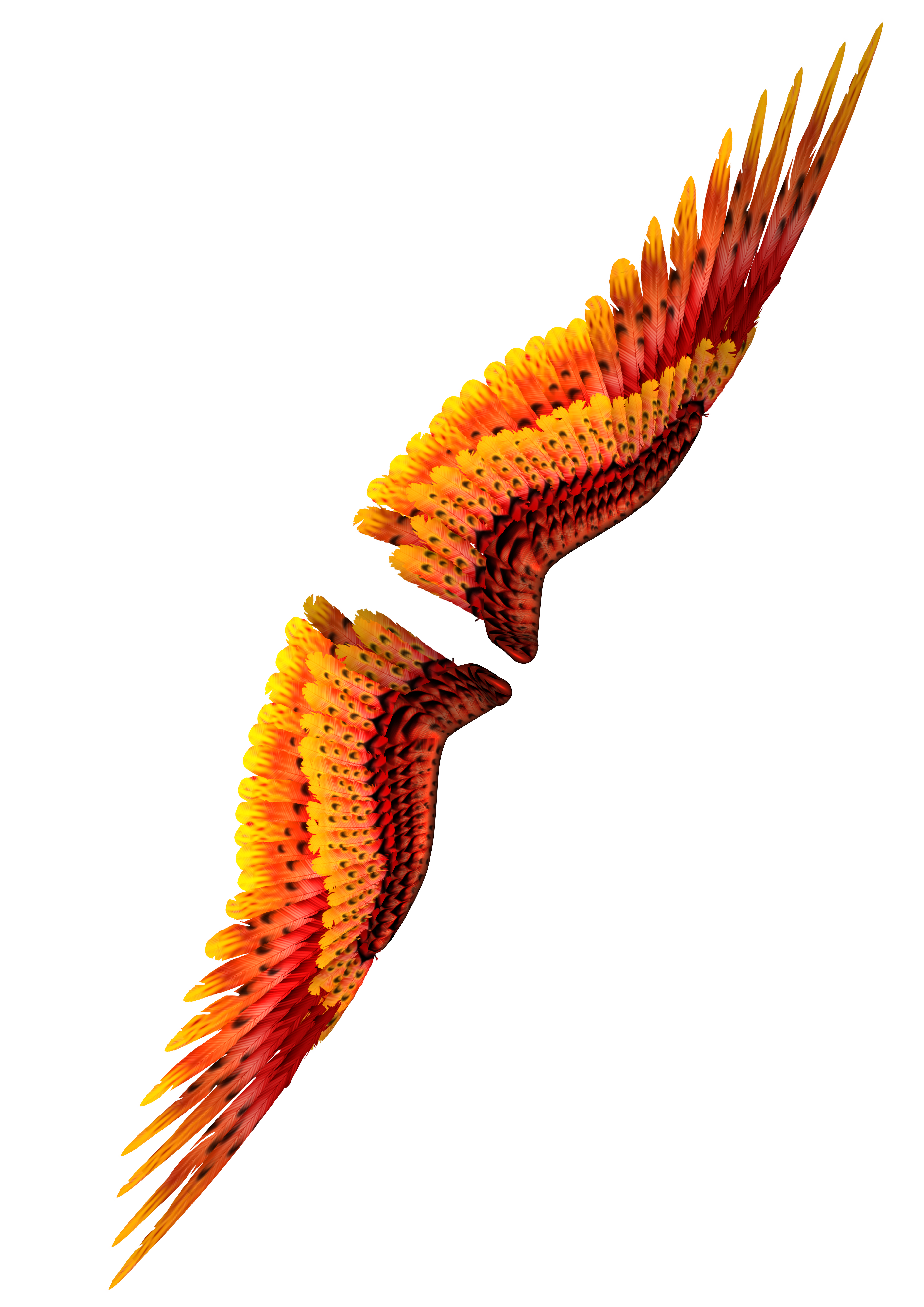 Wings 3, 3d, Feather, Render, Wings, HQ Photo