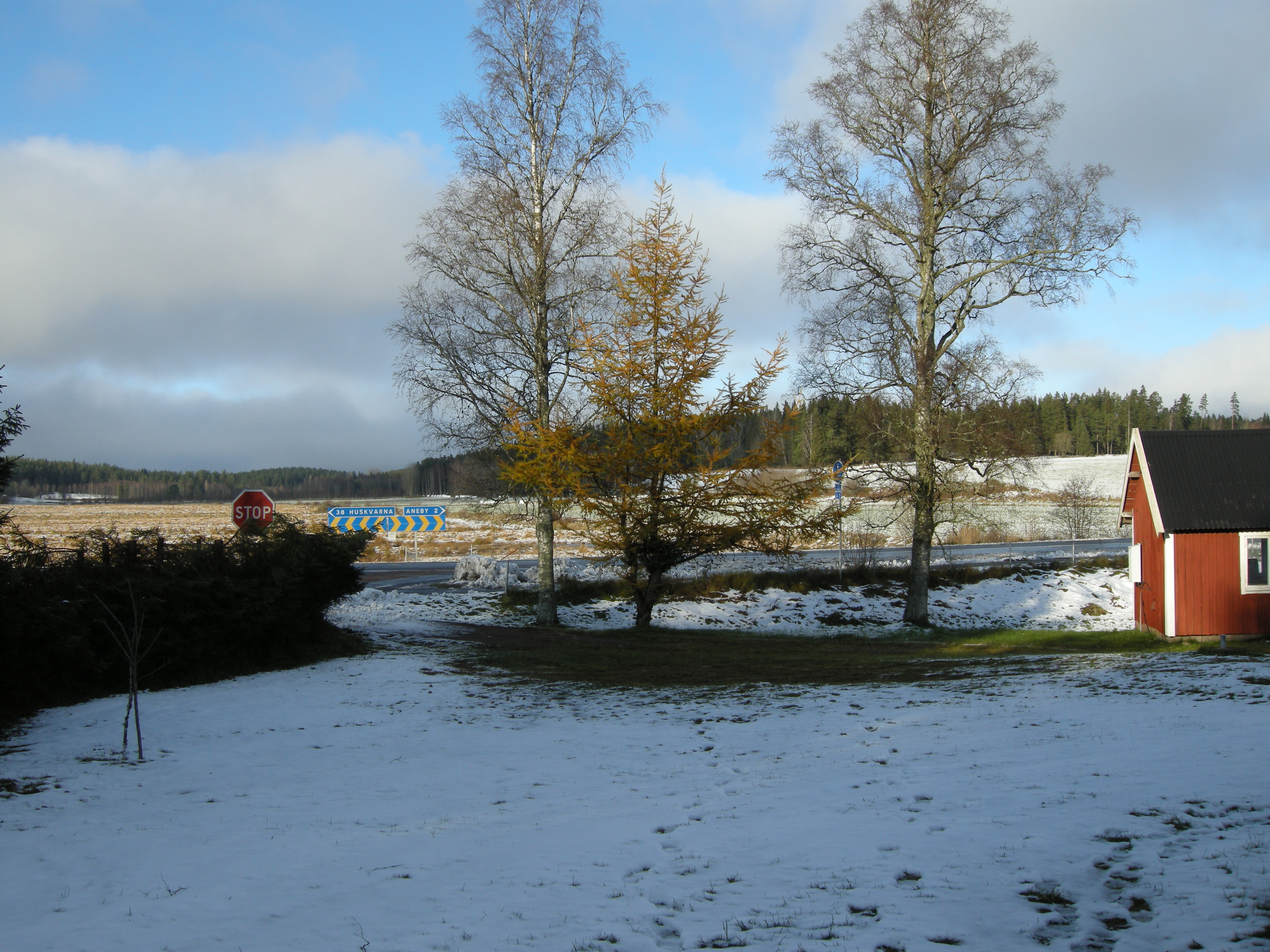 Winter 2008 Sweden Snow Trees HQ Photo