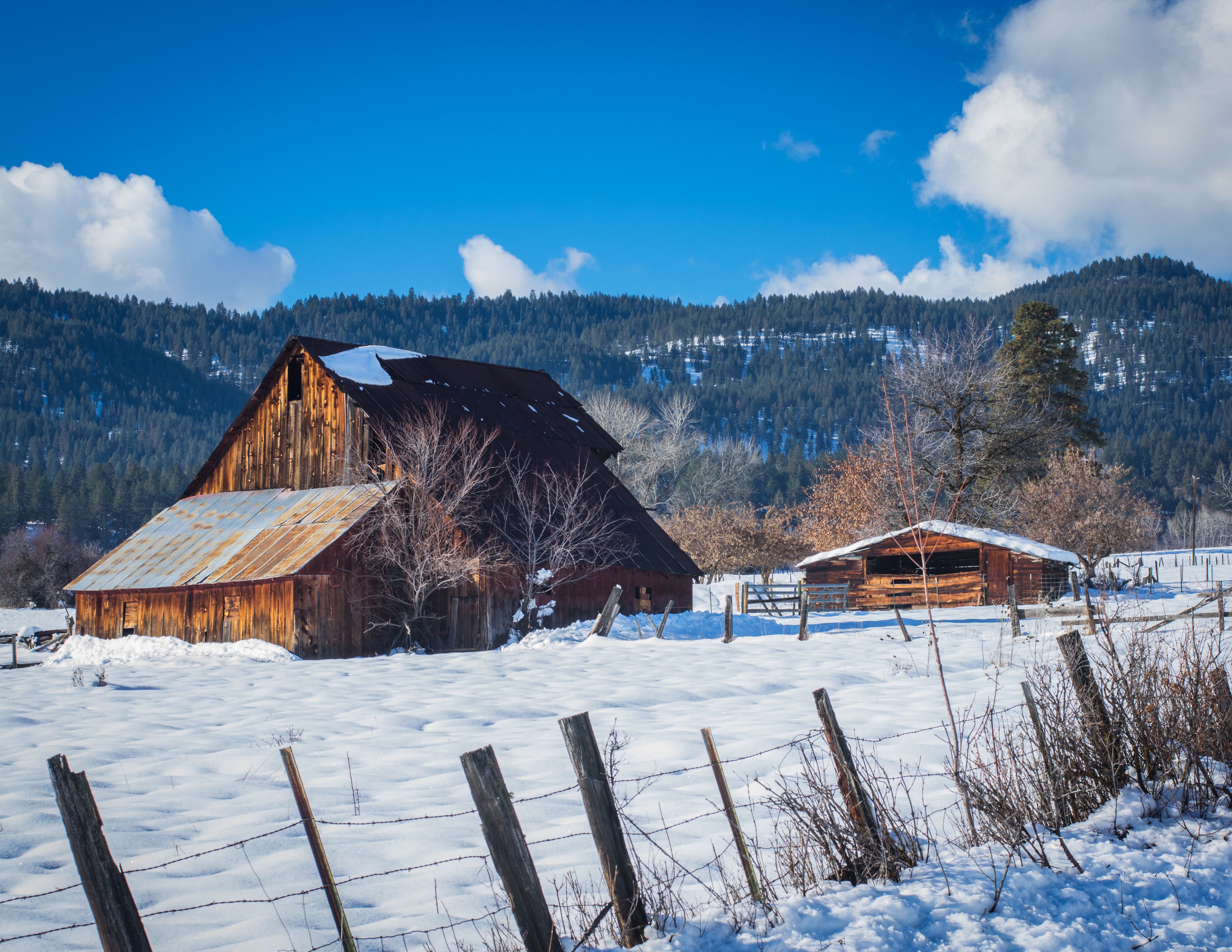Winter barn photo