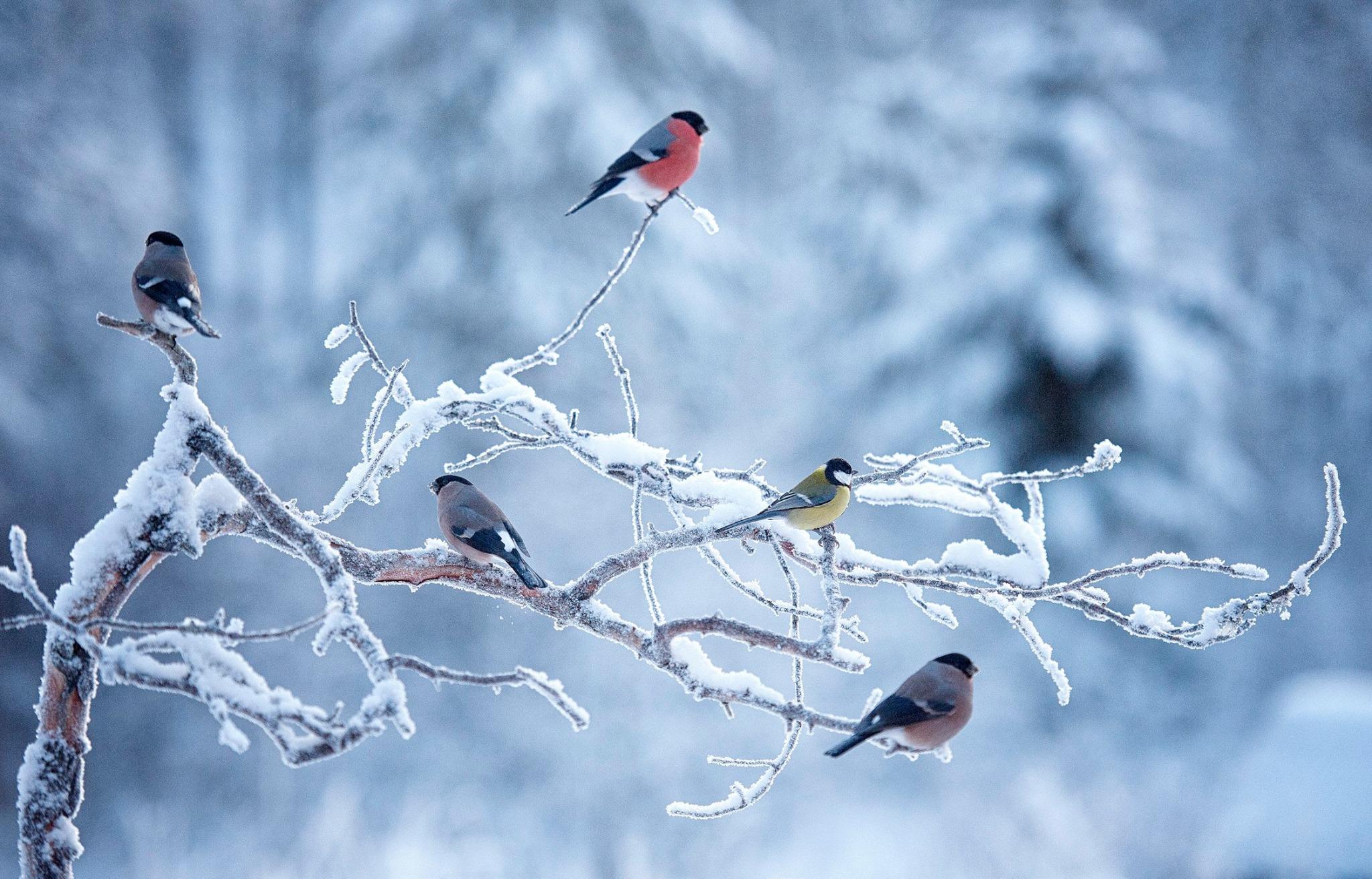 File:Winter bird.jpg - Wikimedia Commons