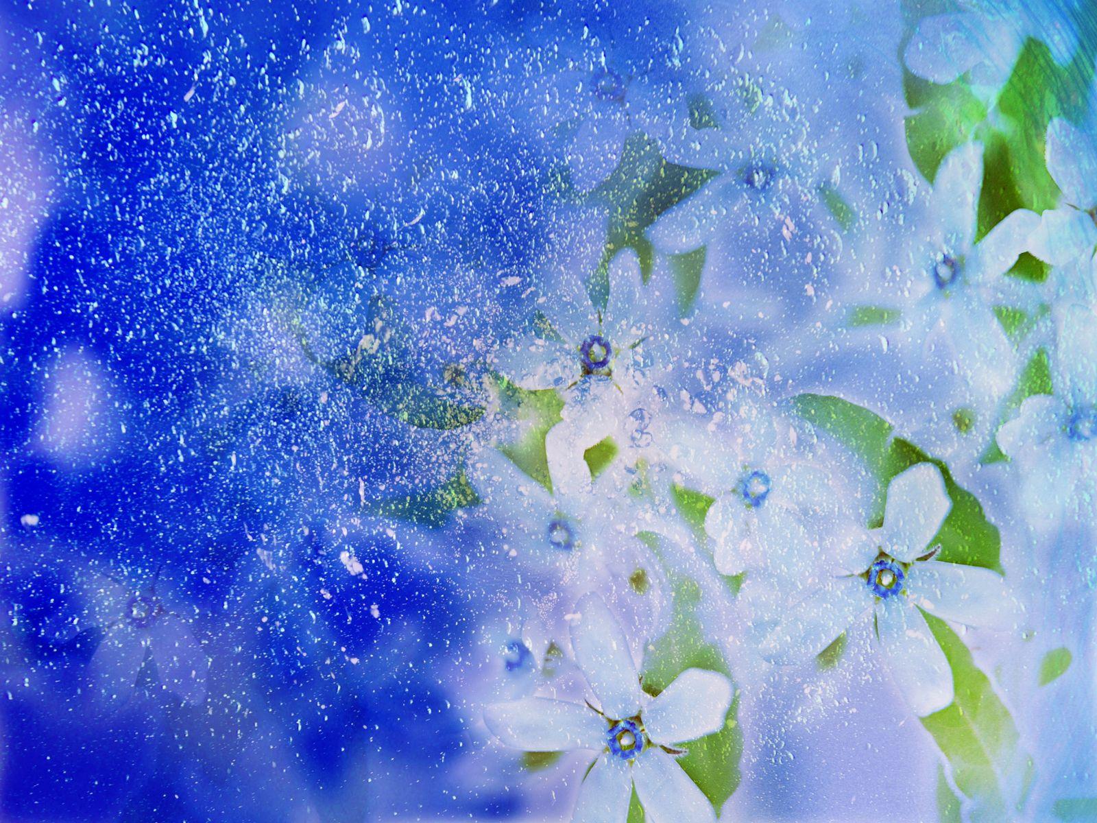 Free photo winter flower green ice winter free download jooinn winter flower izmirmasajfo