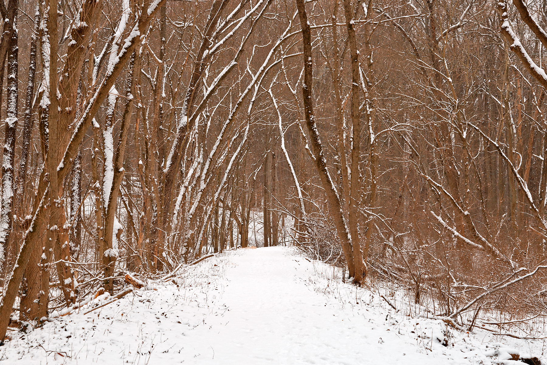 Winter forest tipi trail photo