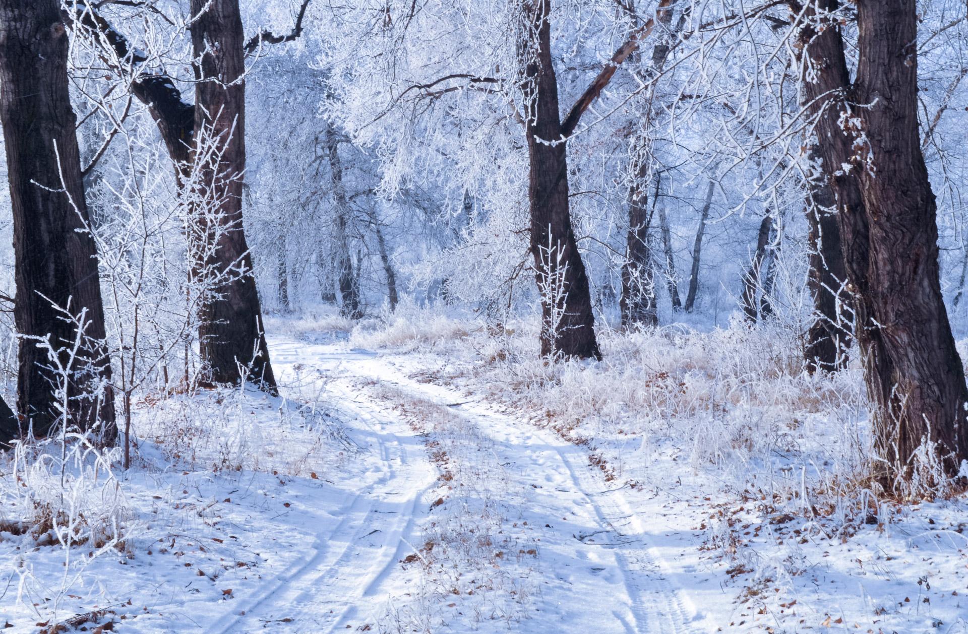 Winter Landscape Free Stock Photo - Public Domain Pictures
