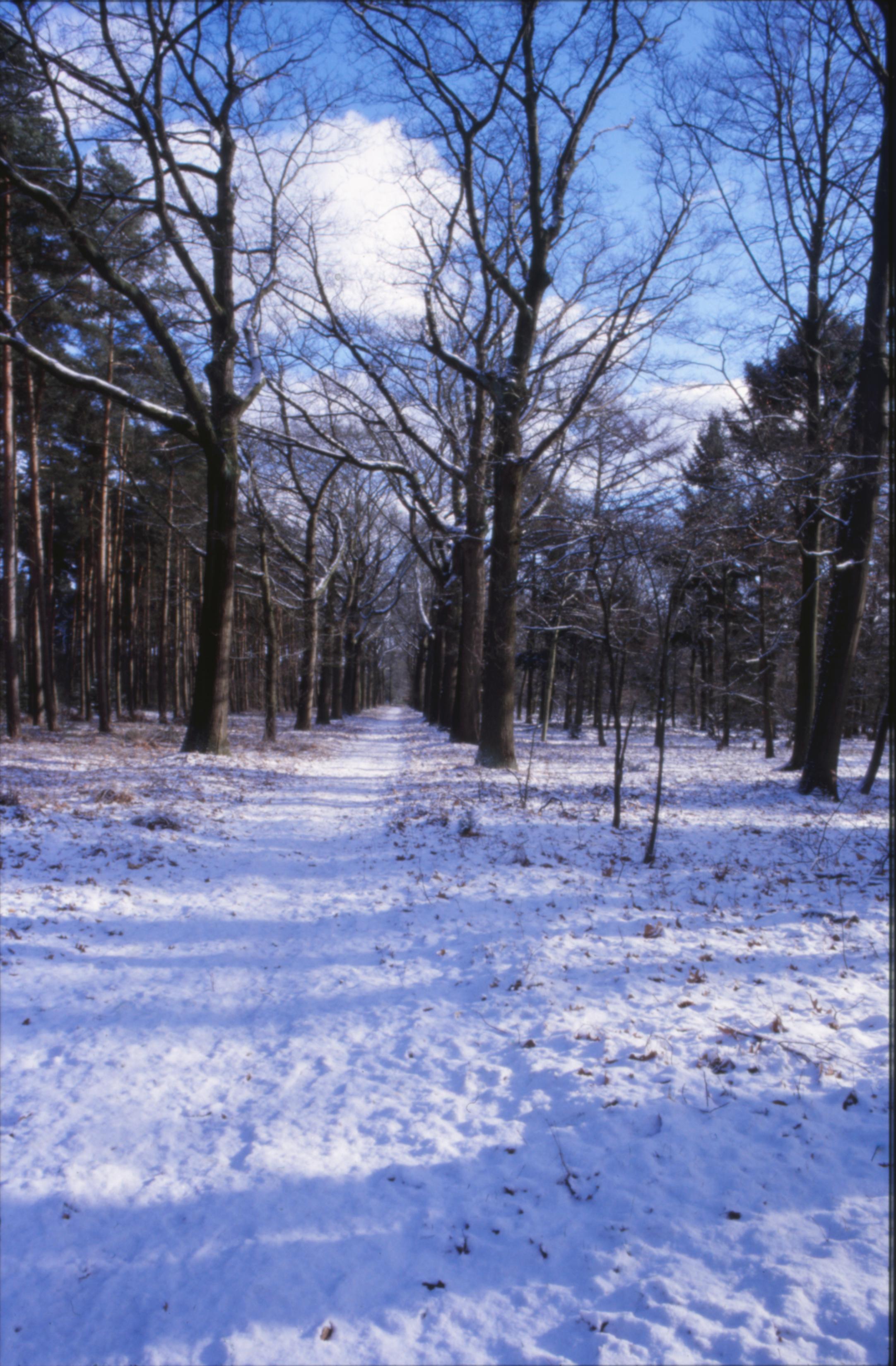 Winter Landscape, Cold, Forest, Ice, Landscape, HQ Photo