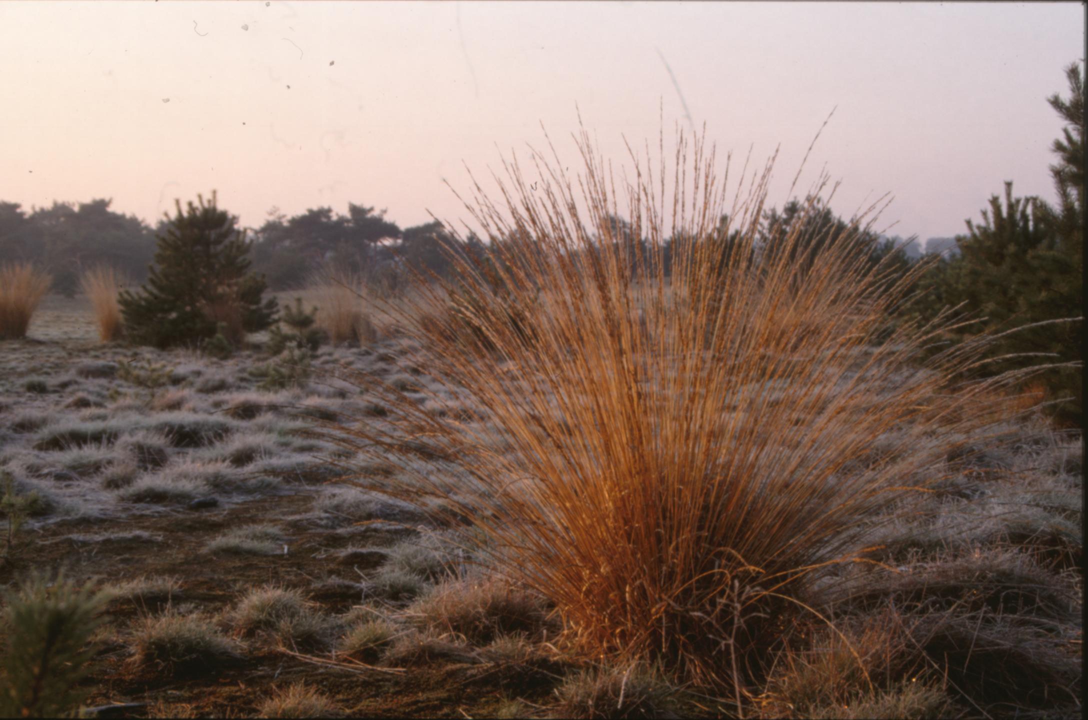 Winter Landscape, Cold, Grass, Ice, Landscape, HQ Photo