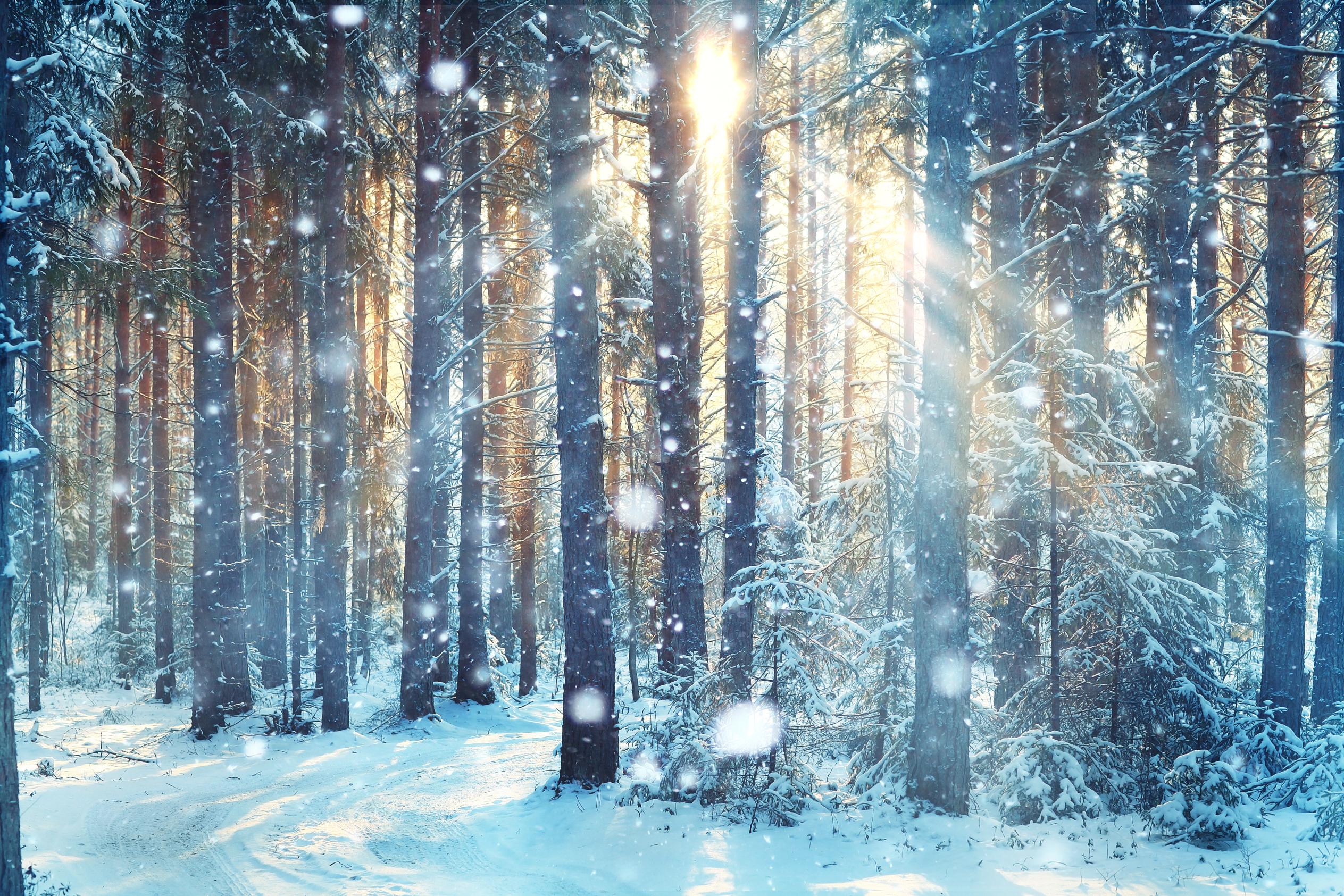 registeredtcmpractitioner.com | Winter Greetings!
